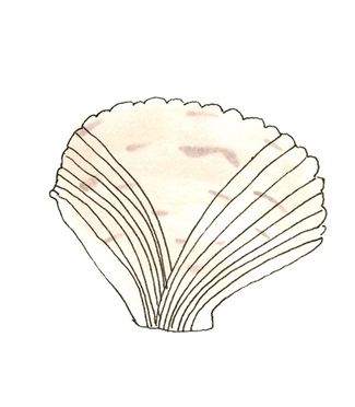SeaShell_smaller.jpg