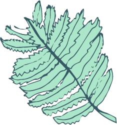 Mint-Fern.jpg