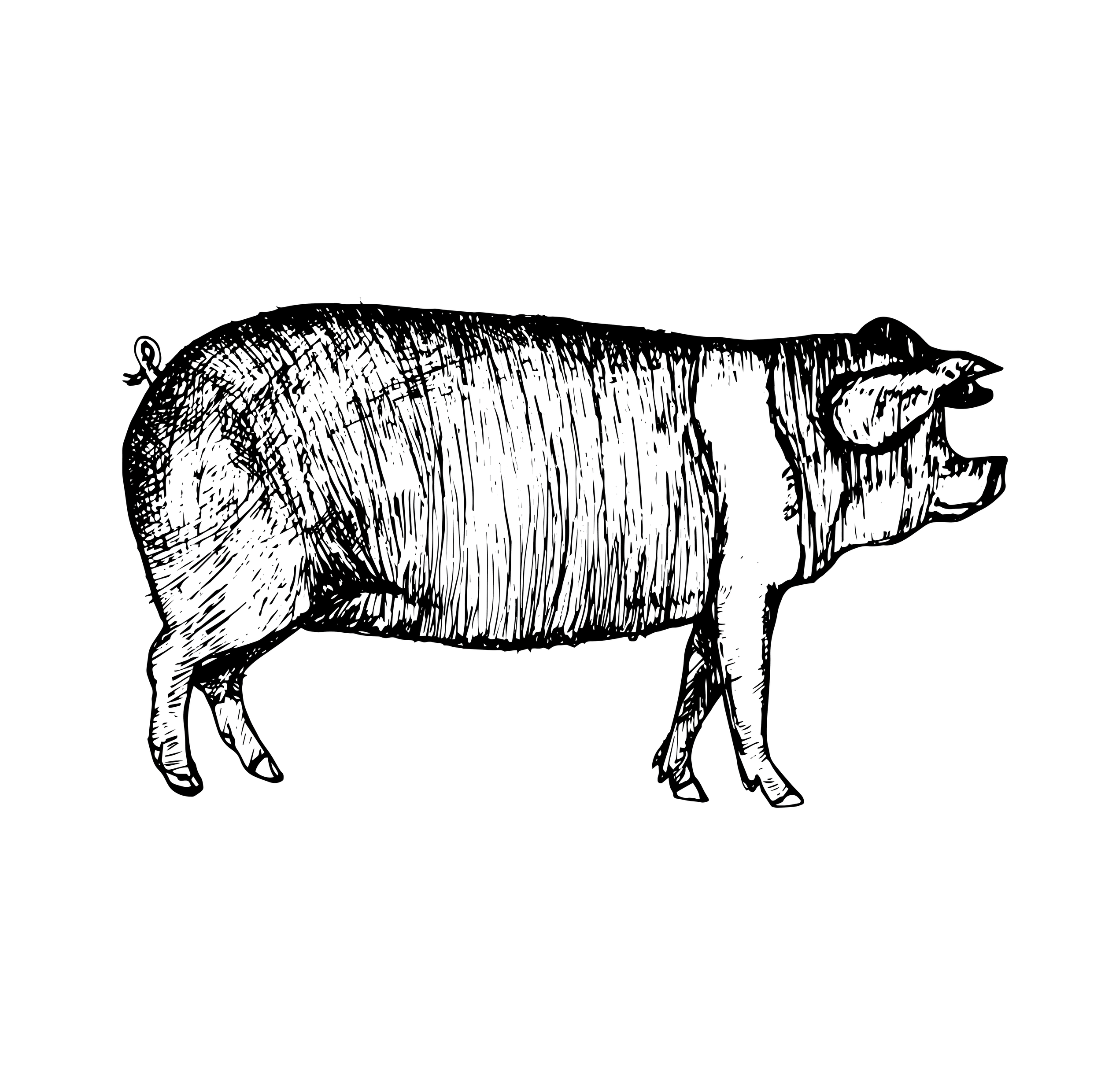 PIg_BW.png