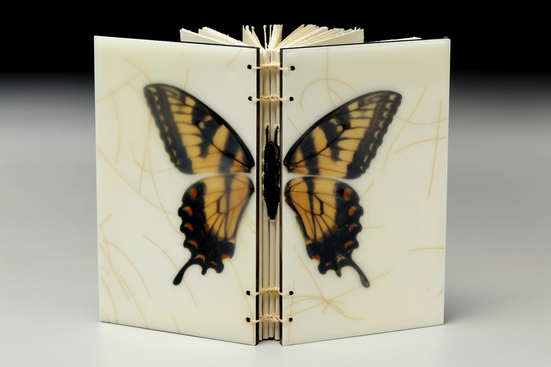 The Butterfly by Erin Keane : fallen butterfly wings : encaustic beeswax covers