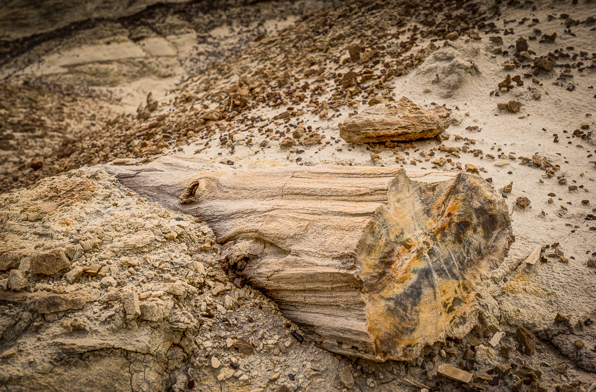 The Bisti area was an ancient a swampy wetlands. This piece of petrified wood was in an area of many fossils and trees-turned-to-stone. I love the knot on the side of the tree!