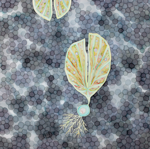 Seeds of Light: Calm