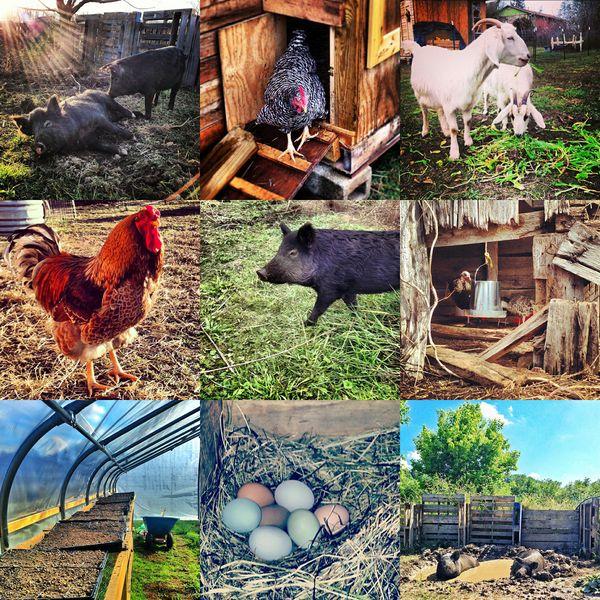 Instagram photos by @deepearthfarm
