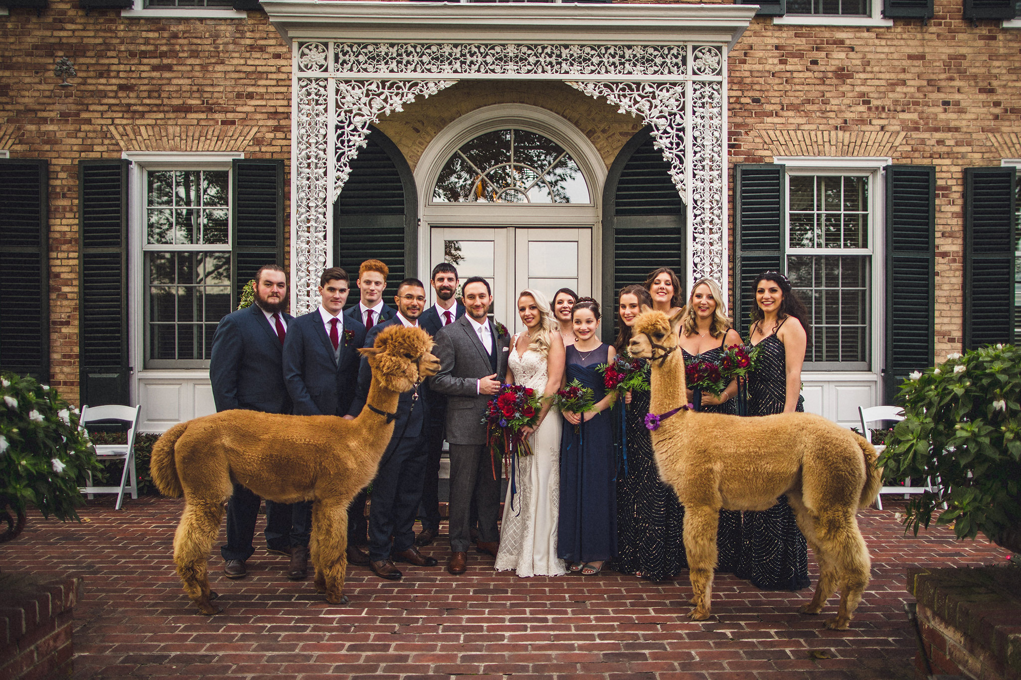 Alpaca Wedding Pennsylvania