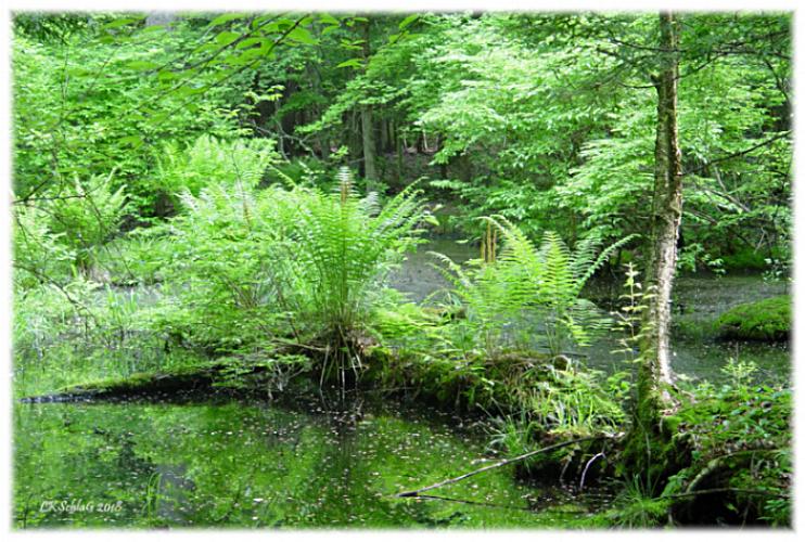 habitat26v2018PadanarumWoods06275asf.png