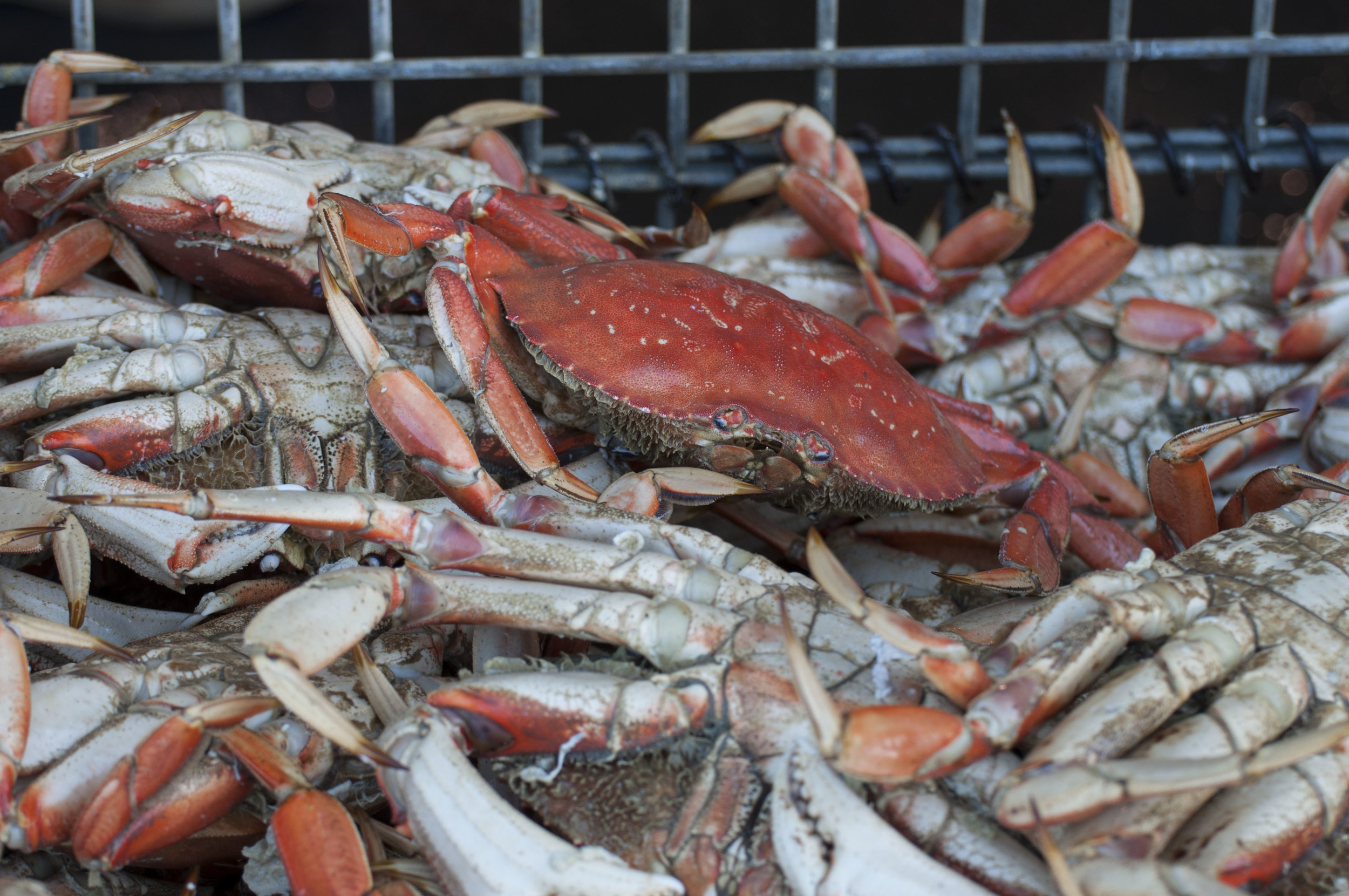 2013-Oct9-PezzoloSeafood-02.jpg