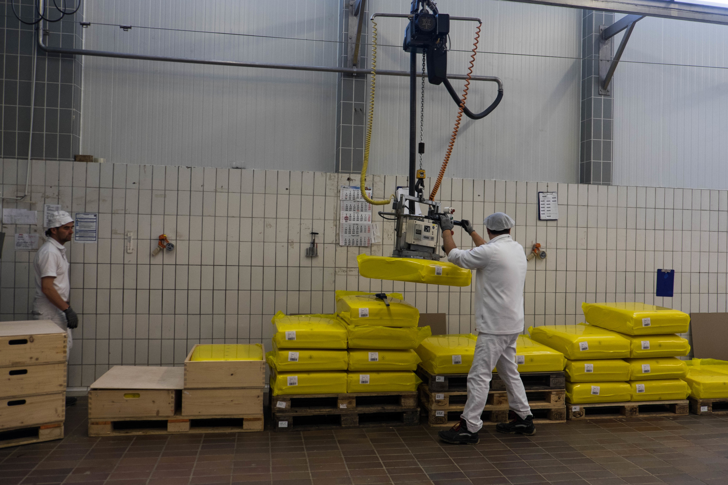 Moving blocks of emmentaler cheese.