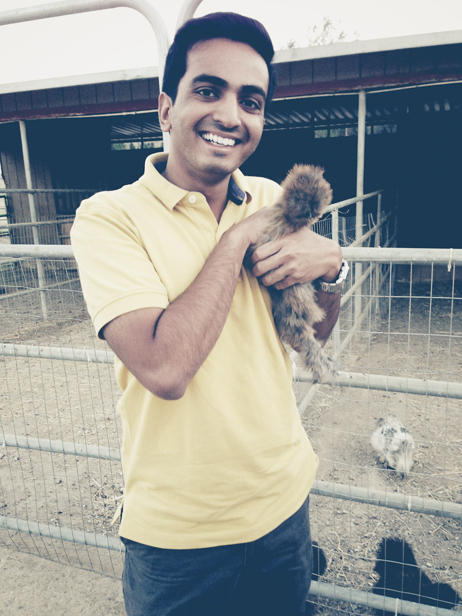 Holding the Chicken