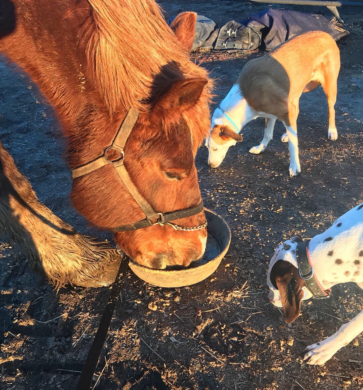 Eating dinner with his farm pup friends….