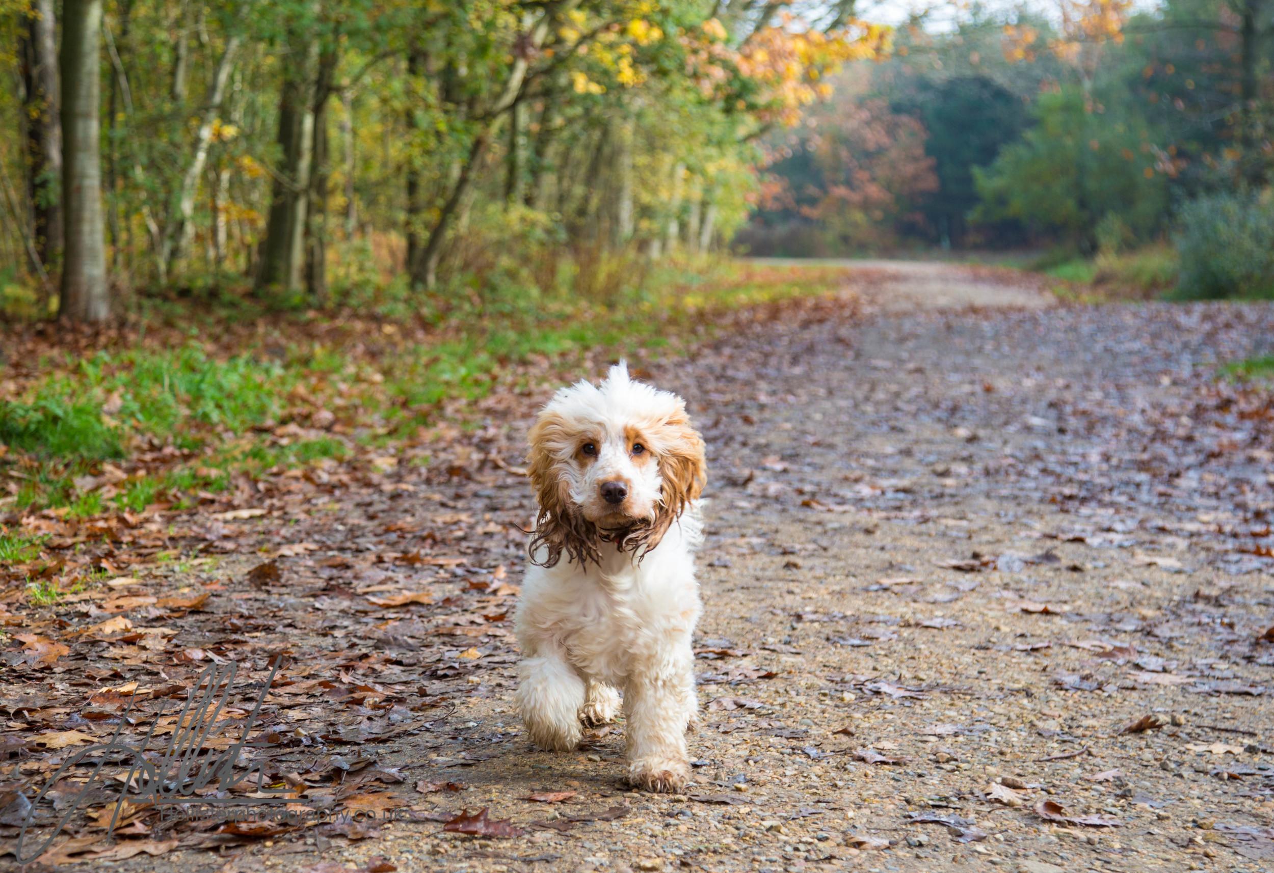 Hollisterphotography ABBY CLOWES WOOD DOG WALK.JPG