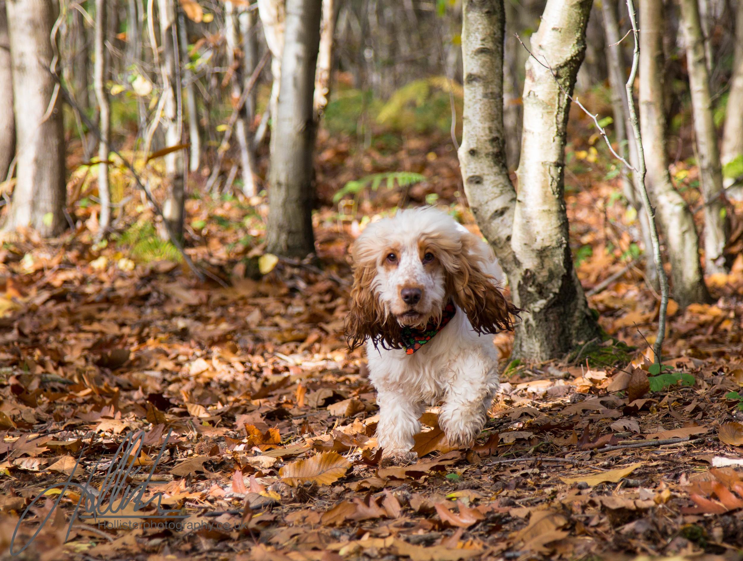 Hollisterphotography ABBY CLOWES WOOD DOG WALK-3.JPG