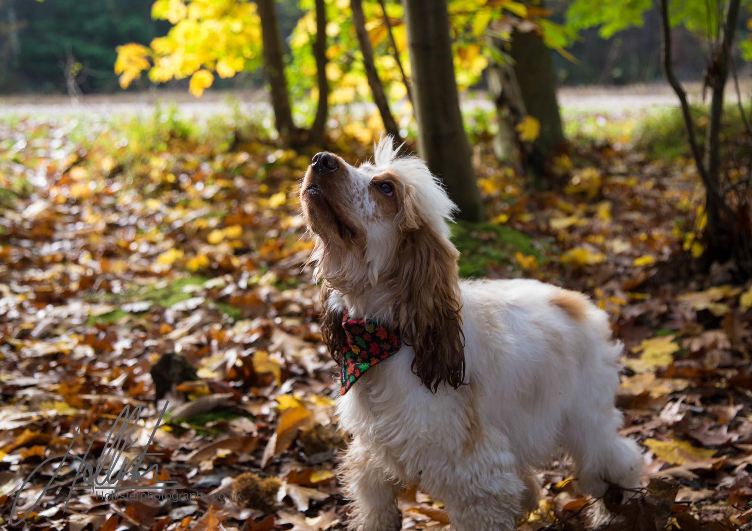 Hollisterphotography ABBY CLOWES WOOD DOG WALK-4.JPG