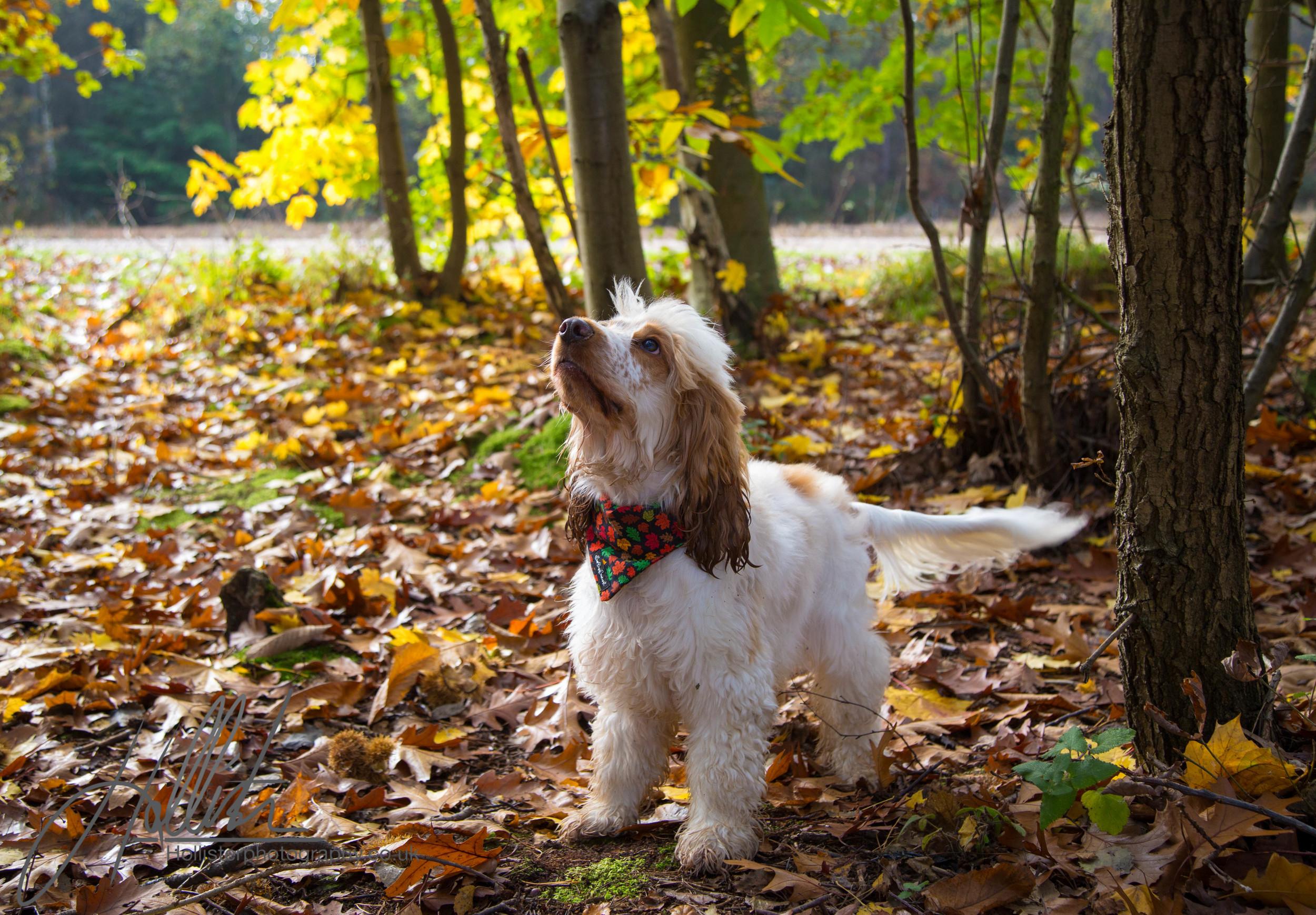 Hollisterphotography ABBY CLOWES WOOD DOG WALK-6.JPG