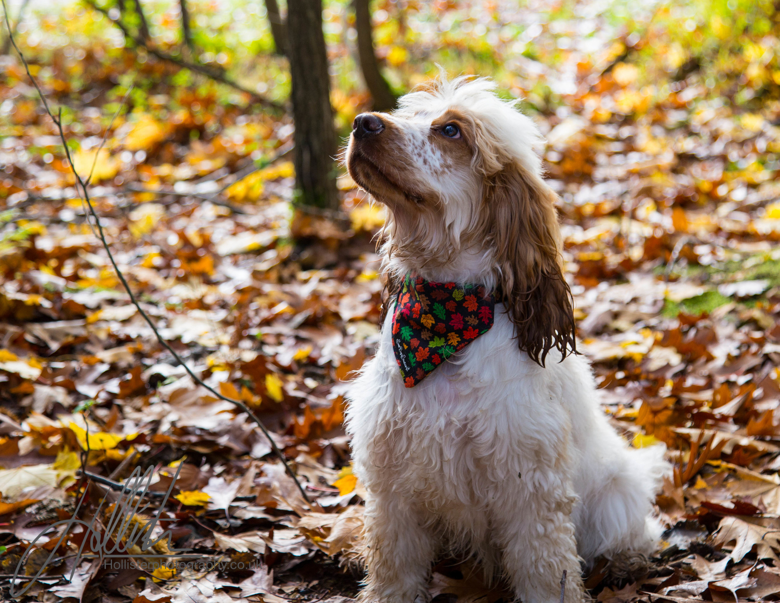 Hollisterphotography ABBY CLOWES WOOD DOG WALK-8.JPG