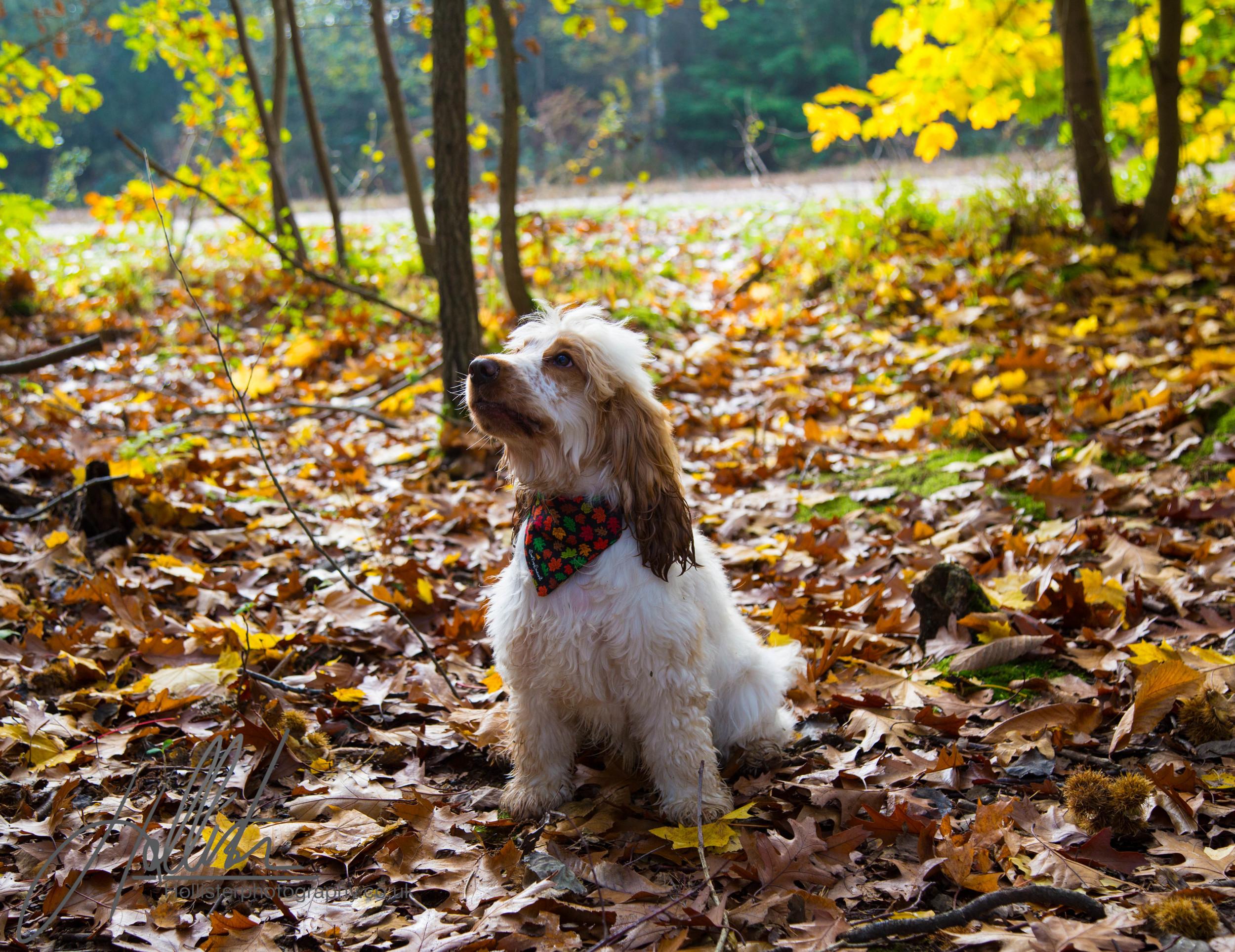 Hollisterphotography ABBY CLOWES WOOD DOG WALK-9.JPG