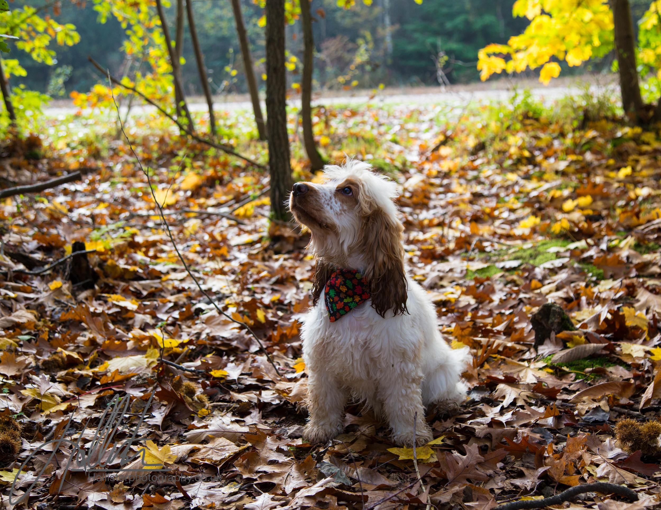 Hollisterphotography ABBY CLOWES WOOD DOG WALK-10.JPG