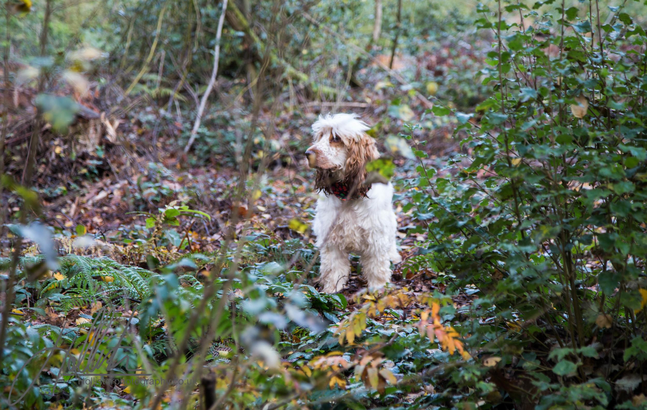 Hollisterphotography ABBY CLOWES WOOD DOG WALK-11.JPG