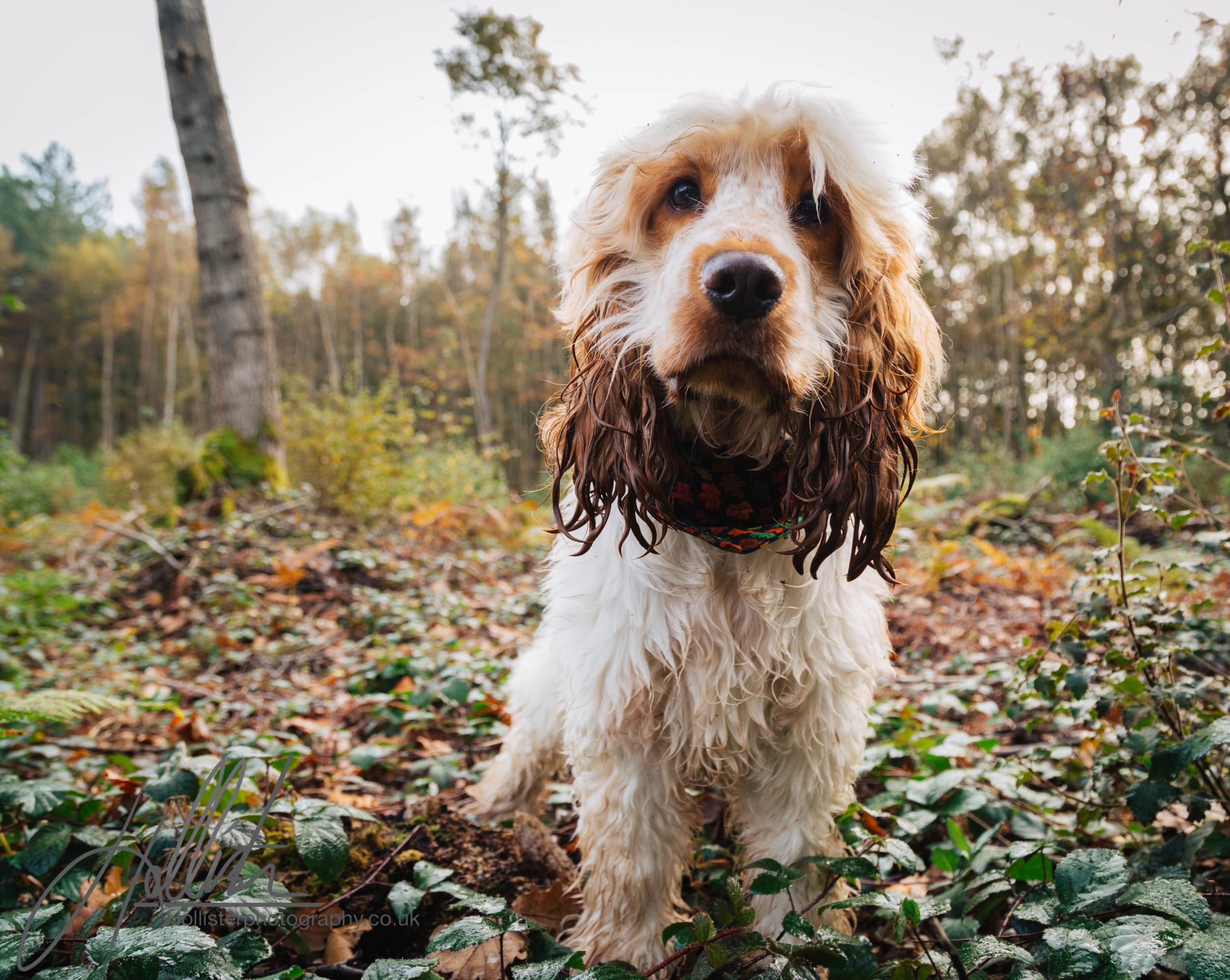 Hollisterphotography ABBY CLOWES WOOD DOG WALK-13.JPG