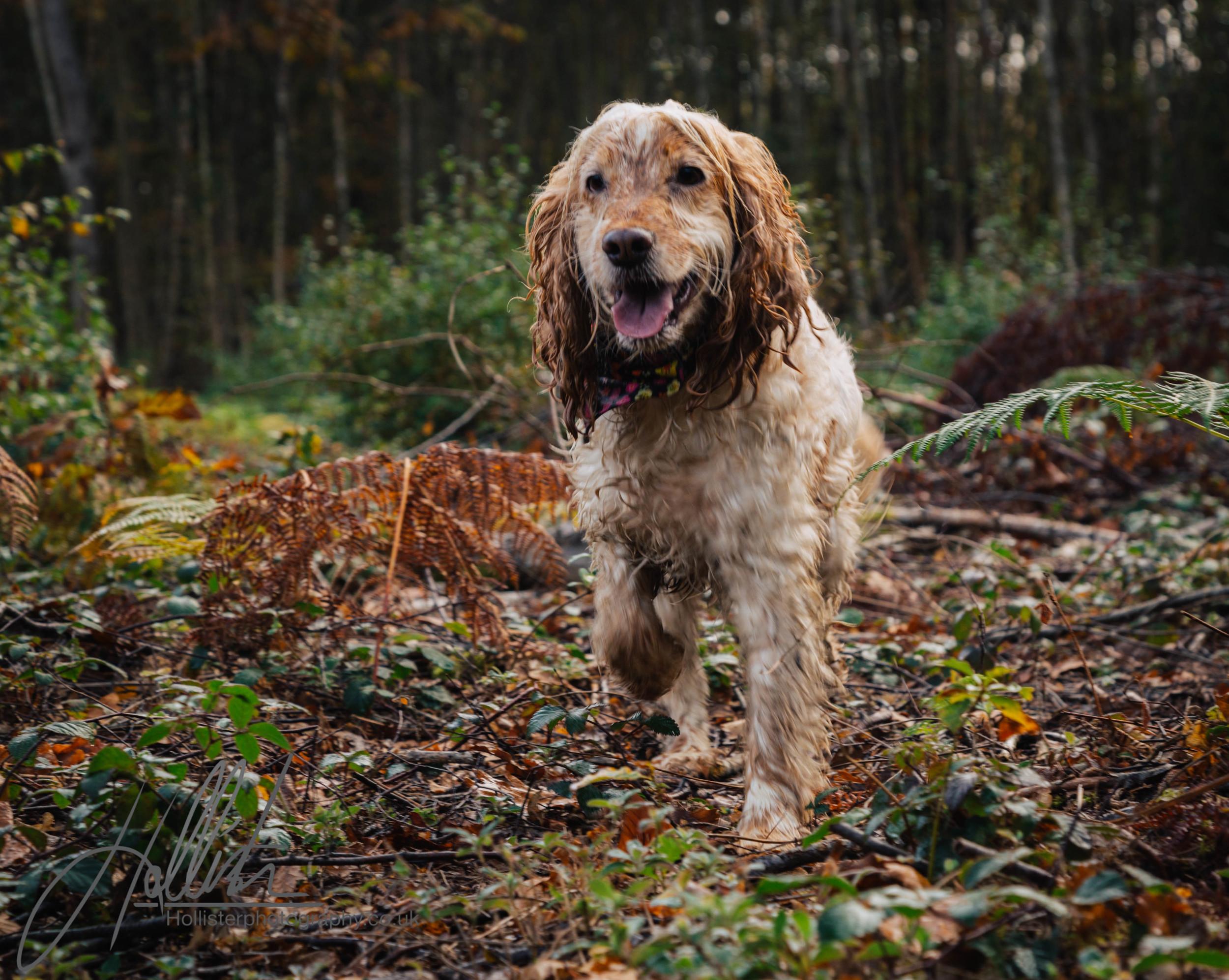 Hollisterphotography ABBY CLOWES WOOD DOG WALK-15.JPG