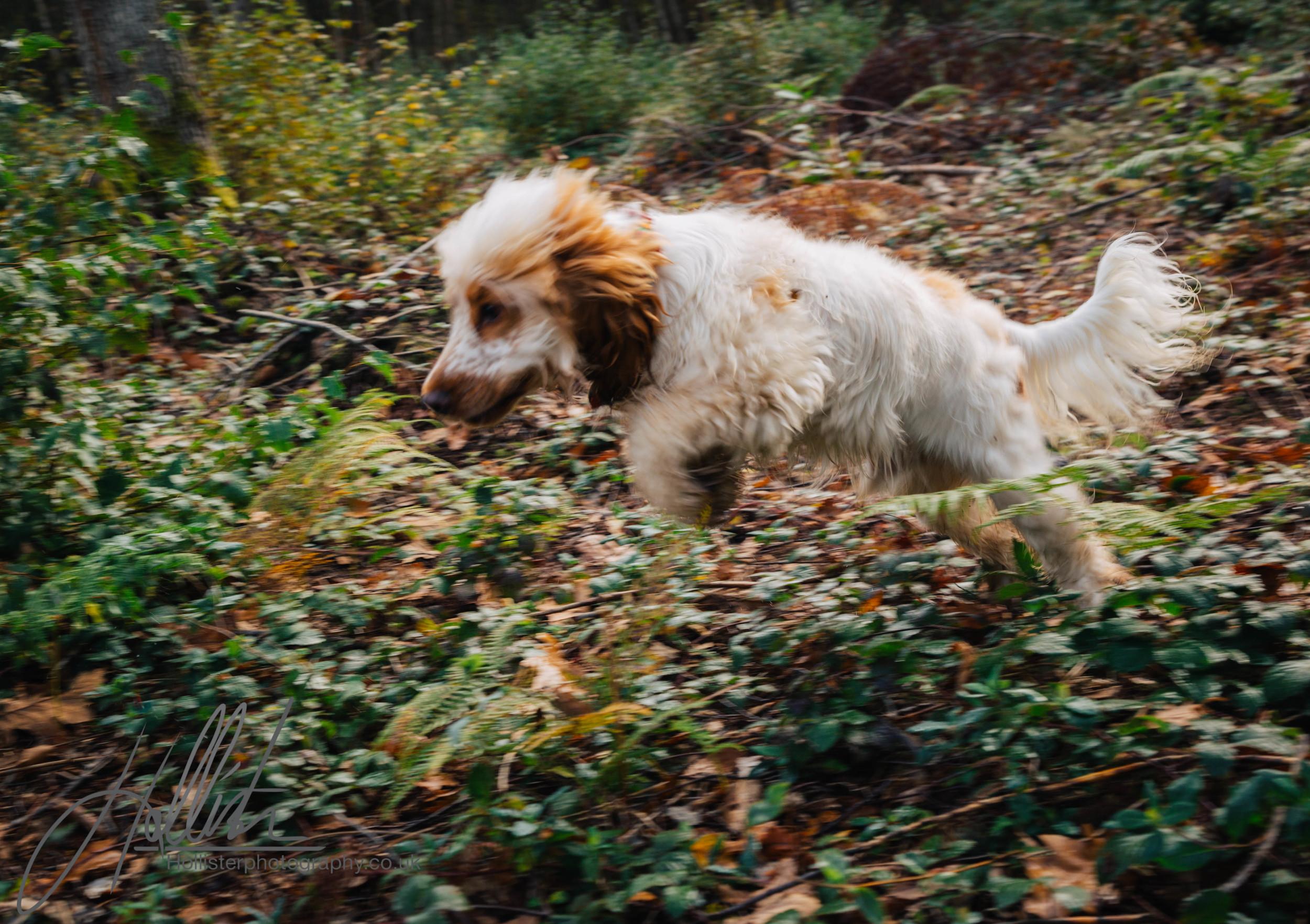 Hollisterphotography ABBY CLOWES WOOD DOG WALK-16.JPG