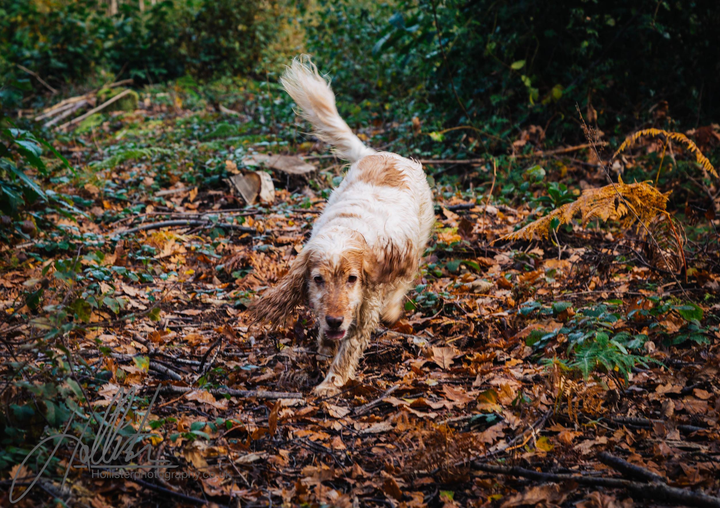 Hollisterphotography ABBY CLOWES WOOD DOG WALK-17.JPG