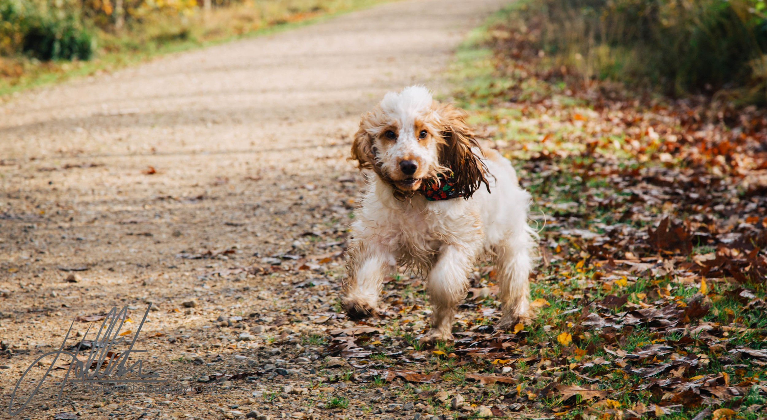 Hollisterphotography ABBY CLOWES WOOD DOG WALK-18.JPG