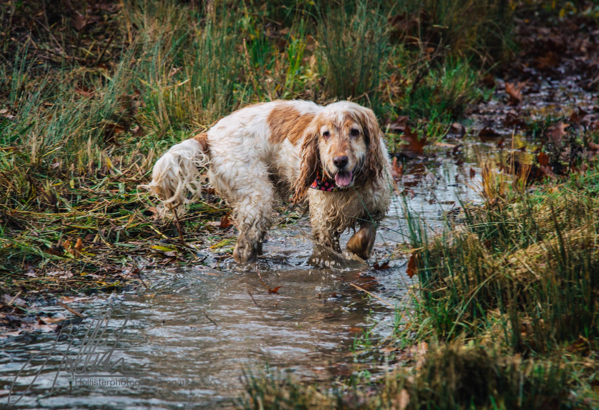 Hollisterphotography ABBY CLOWES WOOD DOG WALK-19.JPG
