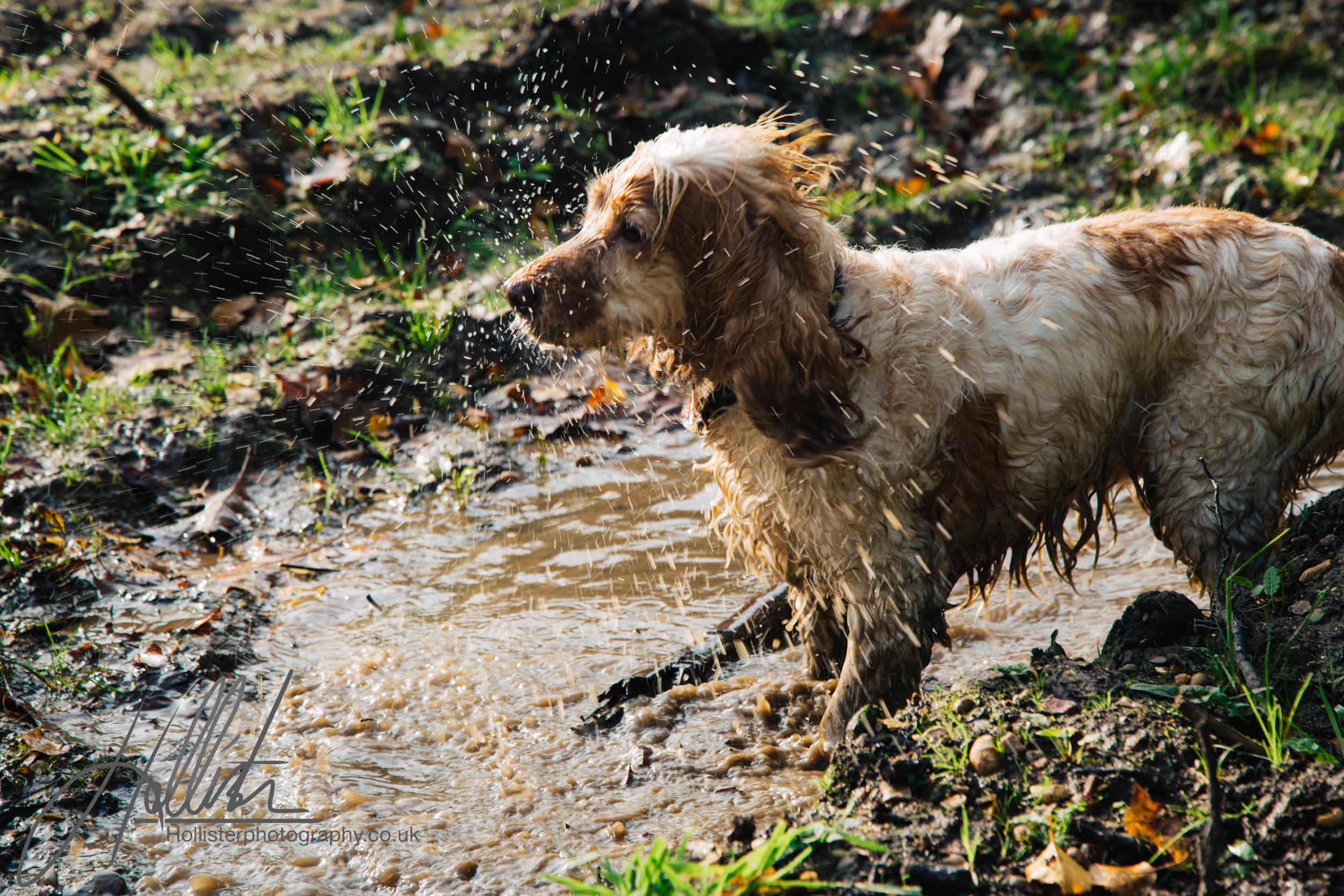 Hollisterphotography ABBY CLOWES WOOD DOG WALK-20.JPG