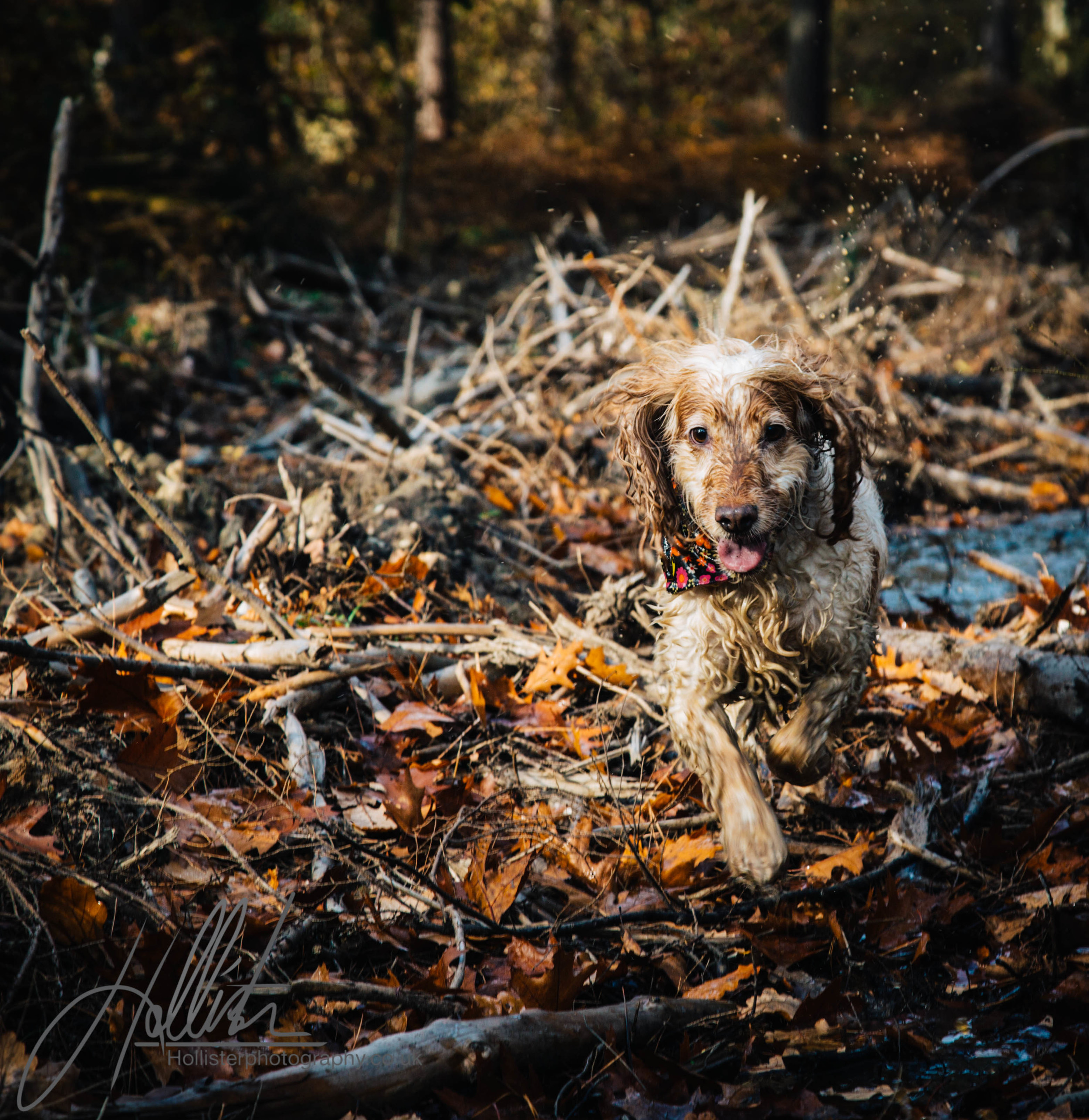Hollisterphotography ABBY CLOWES WOOD DOG WALK-25.JPG