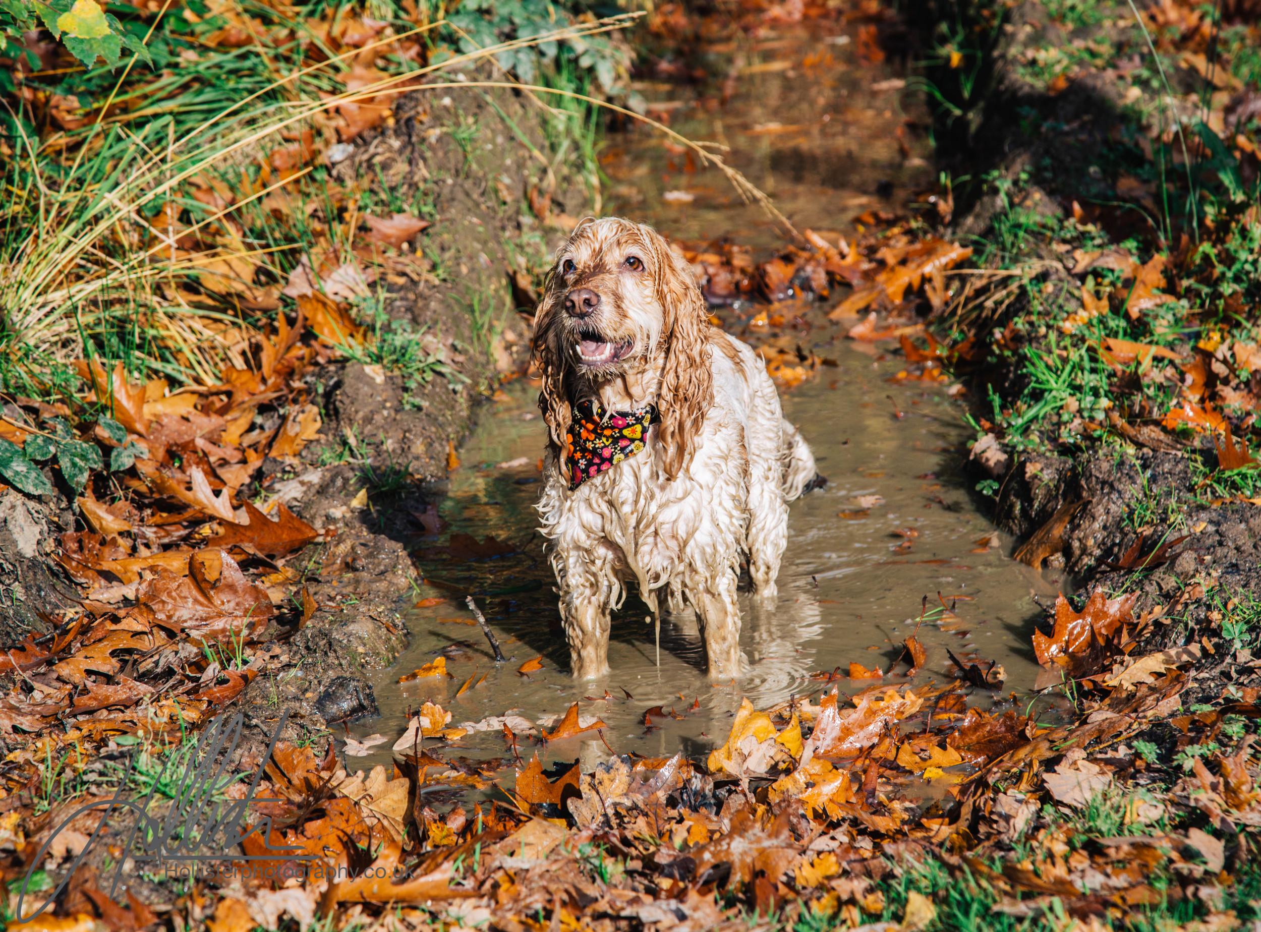 Hollisterphotography ABBY CLOWES WOOD DOG WALK-24.JPG