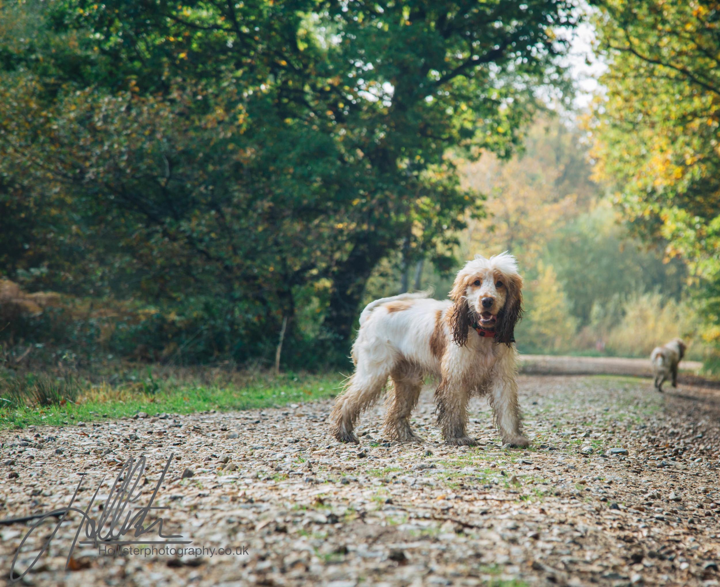 Hollisterphotography ABBY CLOWES WOOD DOG WALK-29.JPG