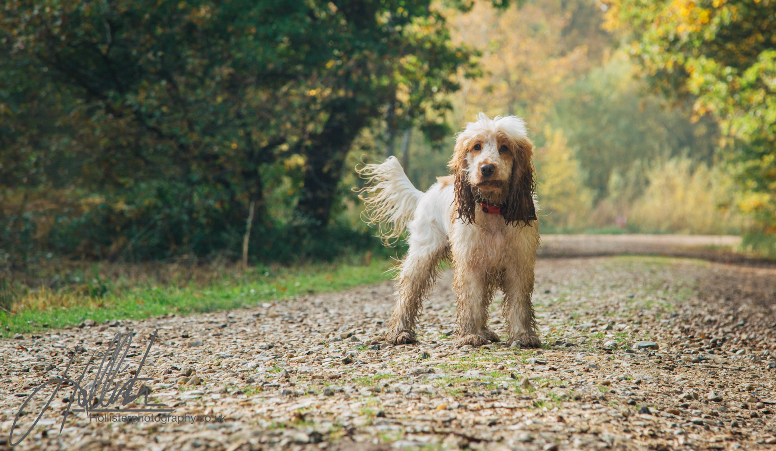 Hollisterphotography ABBY CLOWES WOOD DOG WALK-31.JPG