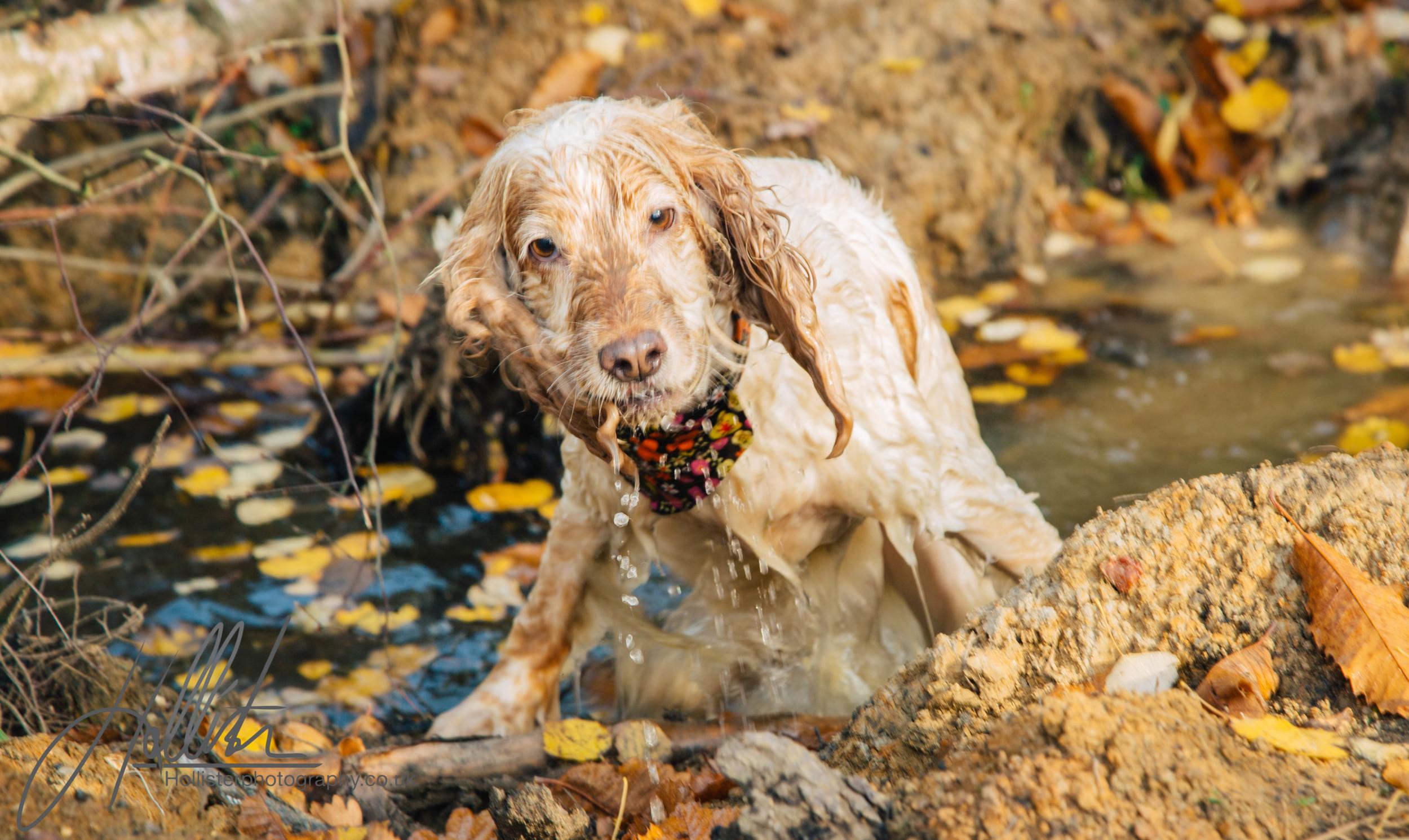 Hollisterphotography ABBY CLOWES WOOD DOG WALK-33.JPG