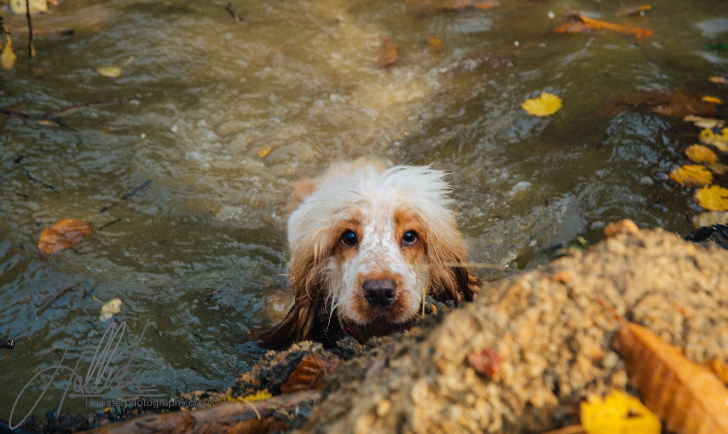 Hollisterphotography ABBY CLOWES WOOD DOG WALK-34.JPG