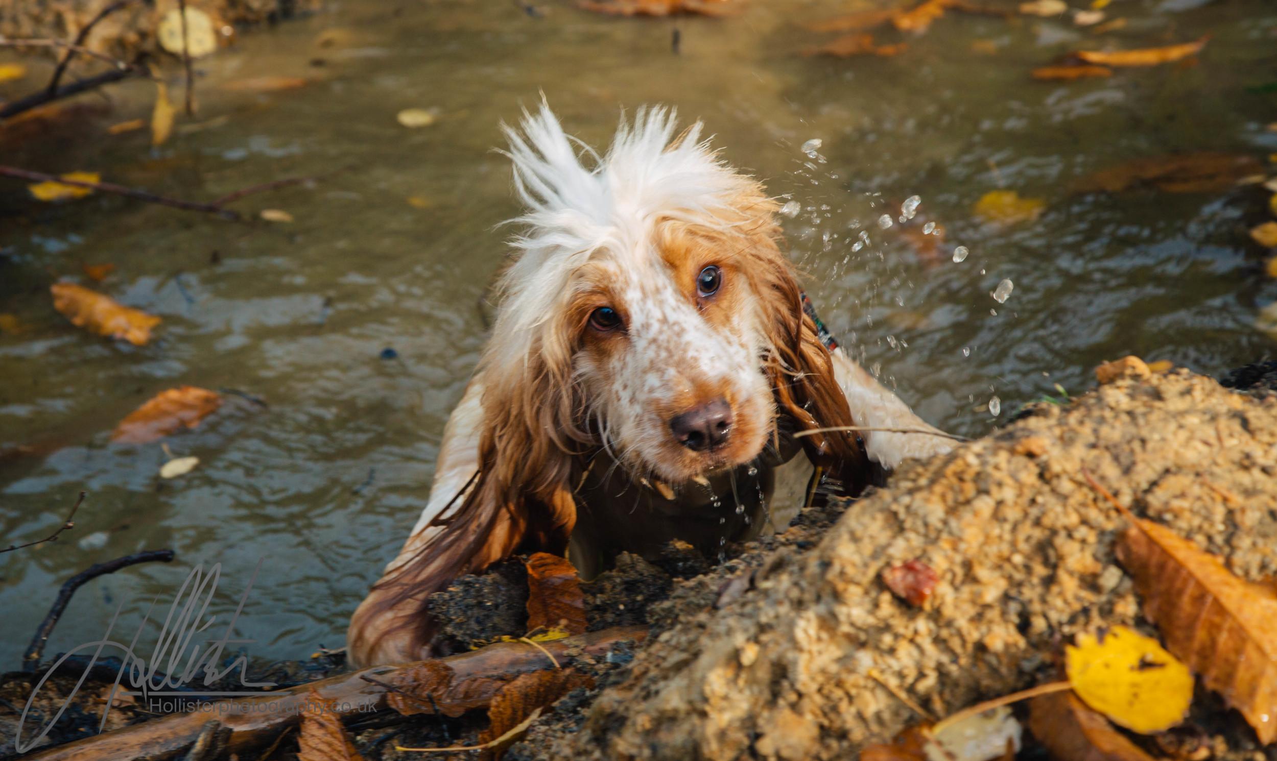 Hollisterphotography ABBY CLOWES WOOD DOG WALK-35.JPG