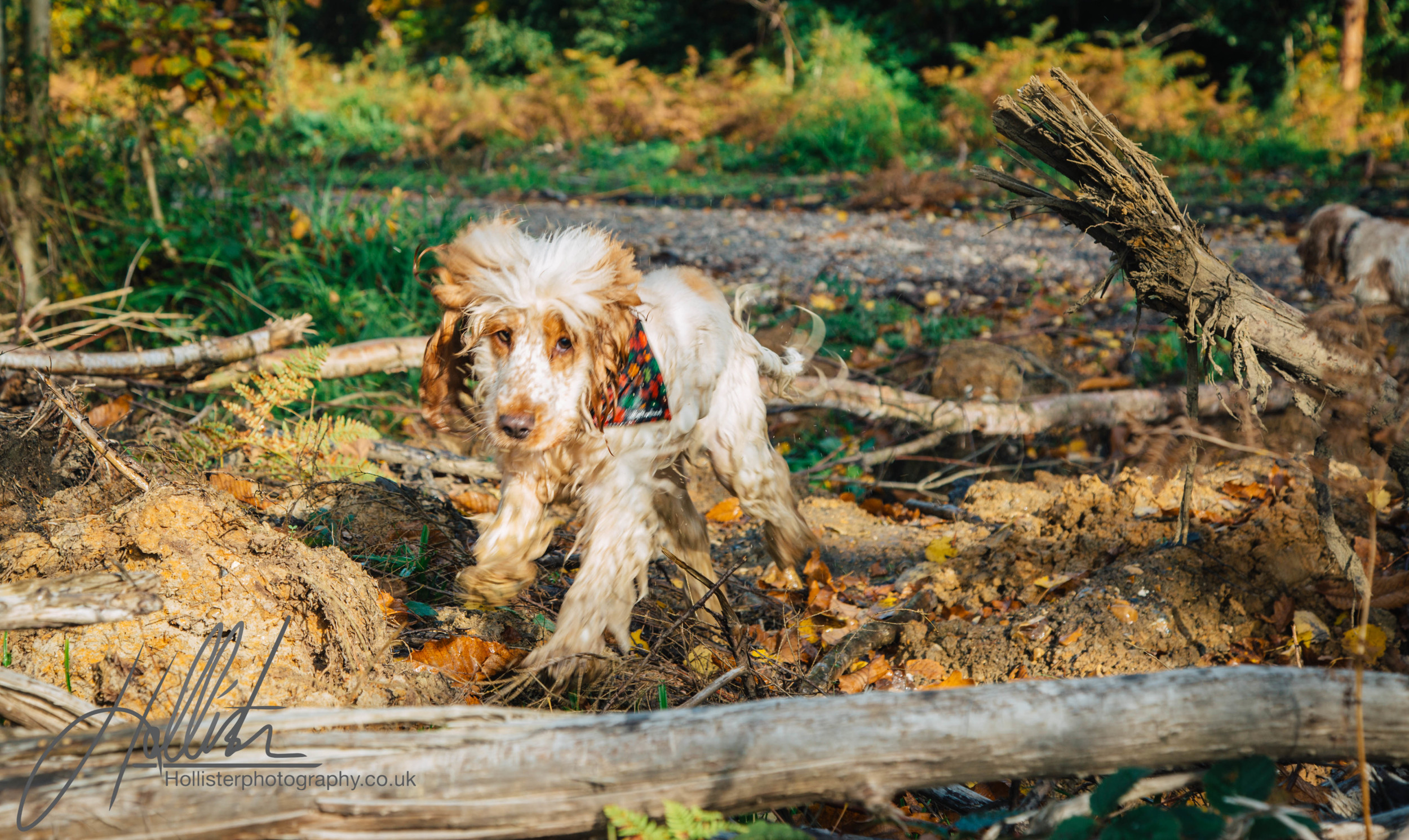 Hollisterphotography ABBY CLOWES WOOD DOG WALK-36.JPG