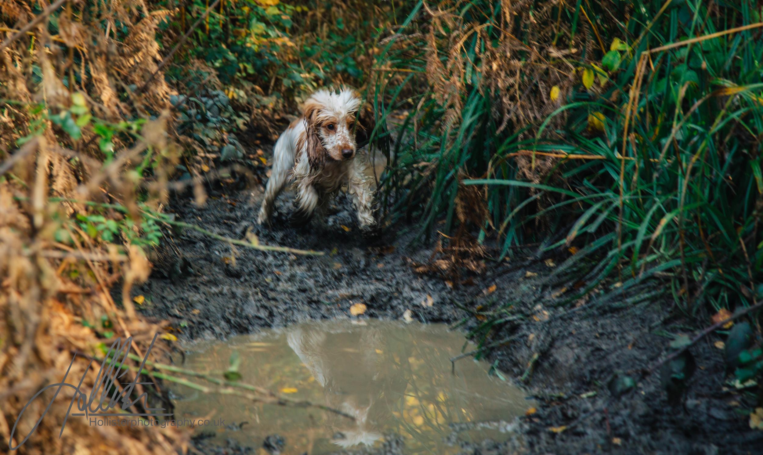 Hollisterphotography ABBY CLOWES WOOD DOG WALK-37.JPG