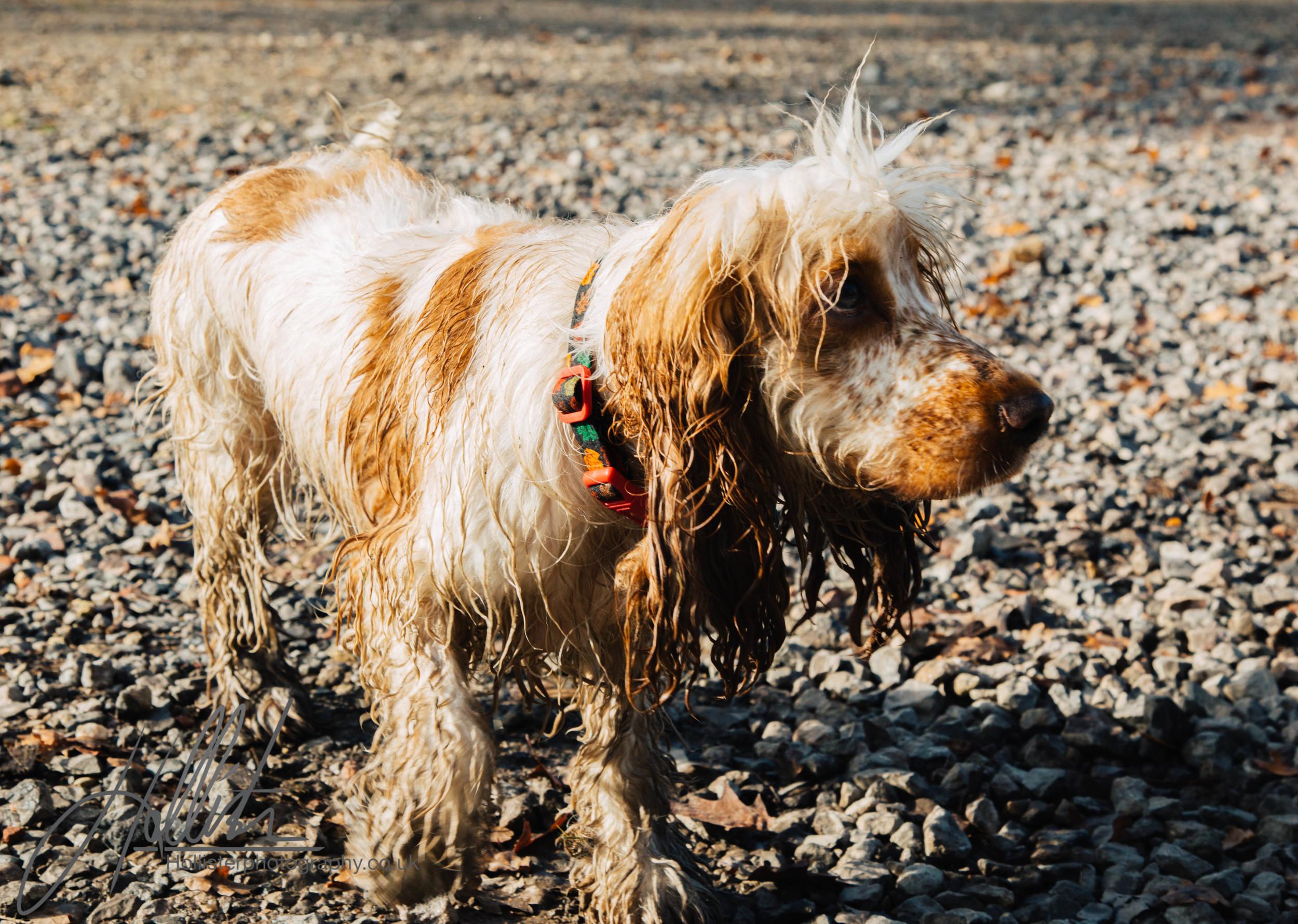 Hollisterphotography ABBY CLOWES WOOD DOG WALK-41.JPG