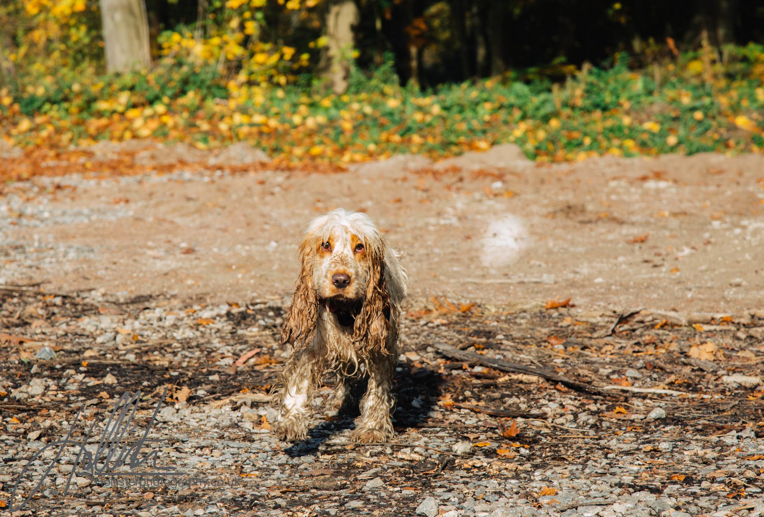 Hollisterphotography ABBY CLOWES WOOD DOG WALK-43.JPG