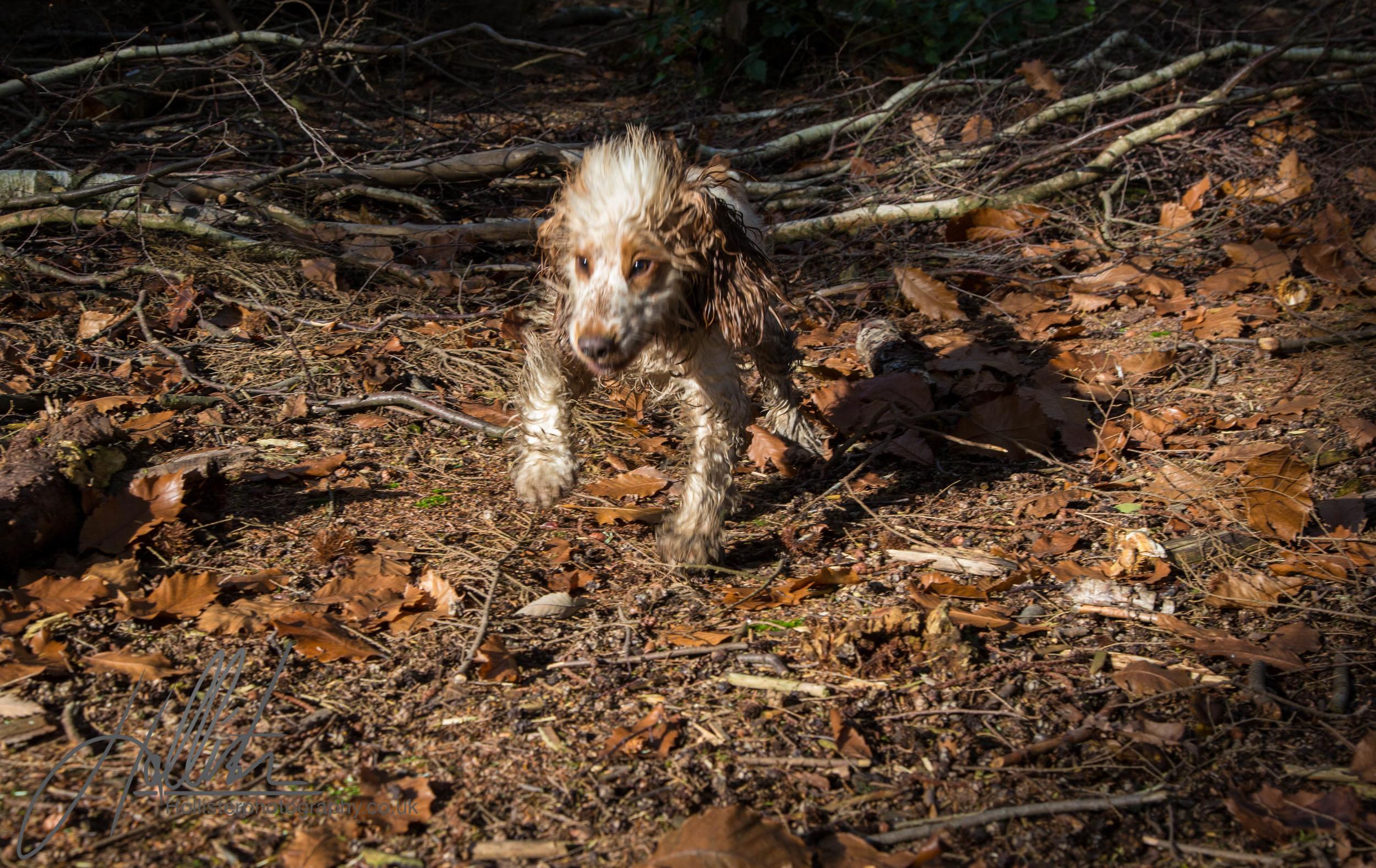 Hollisterphotography ABBY CLOWES WOOD DOG WALK-45.JPG