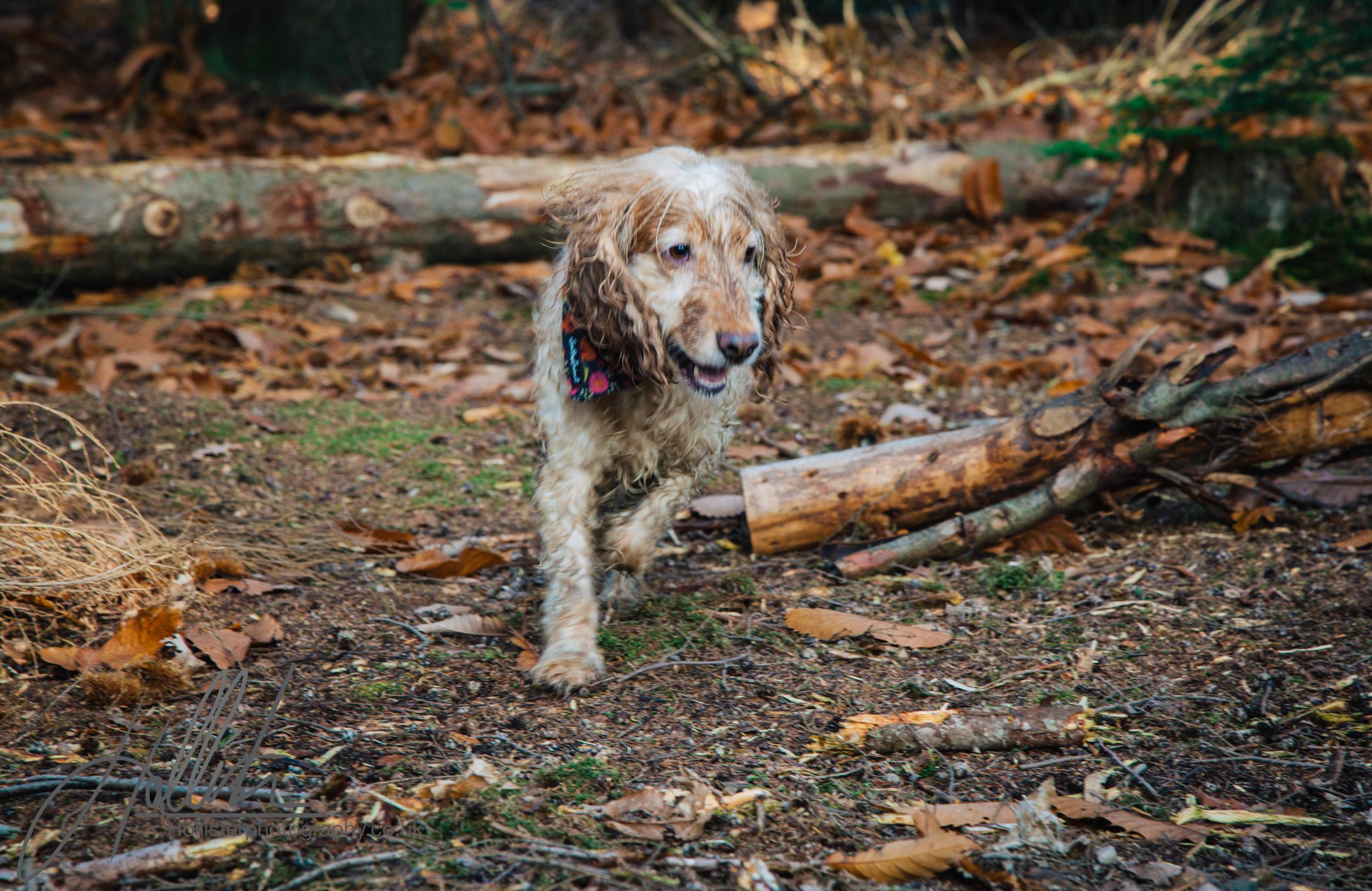 Hollisterphotography ABBY CLOWES WOOD DOG WALK-46.JPG