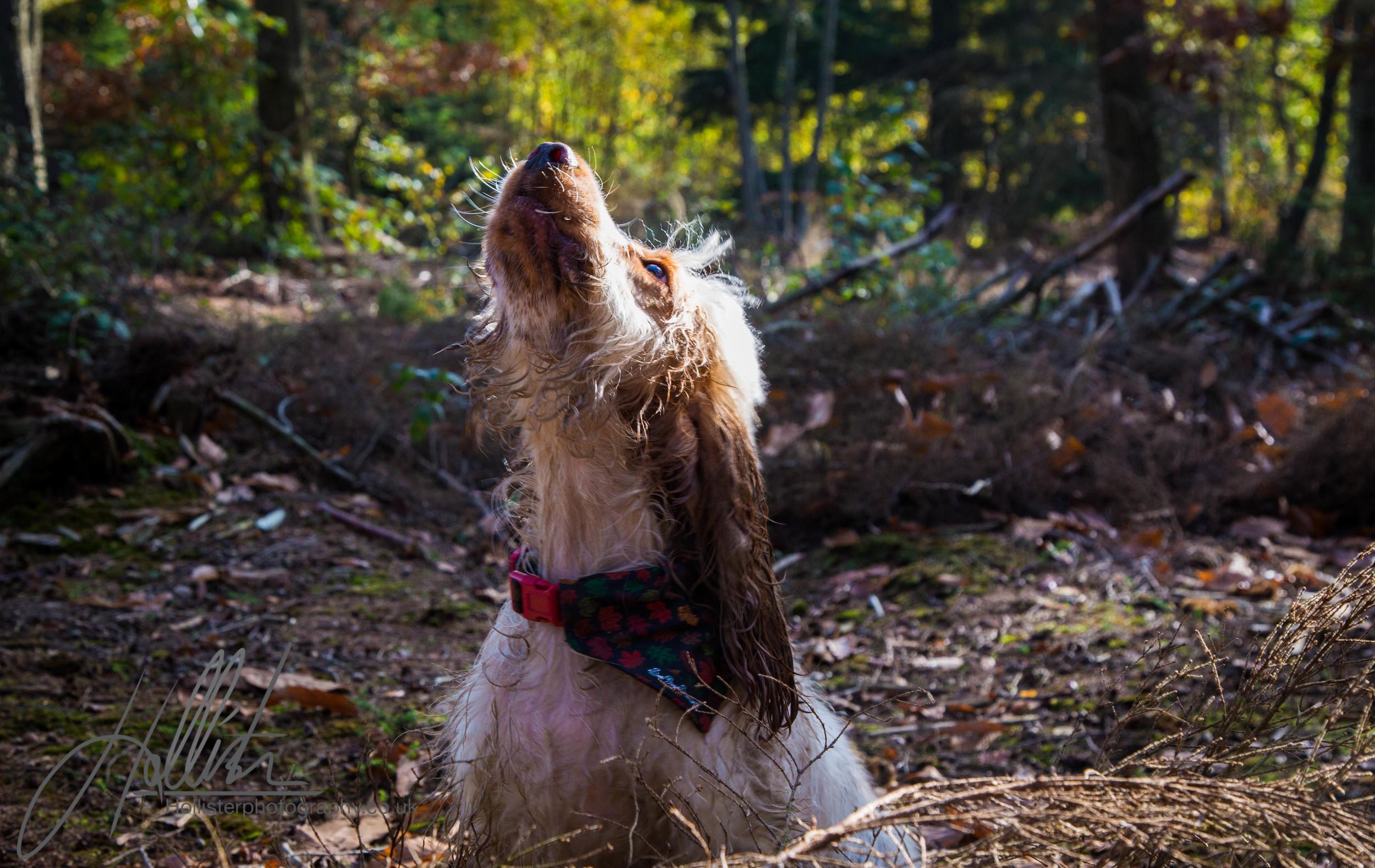 Hollisterphotography ABBY CLOWES WOOD DOG WALK-47.JPG