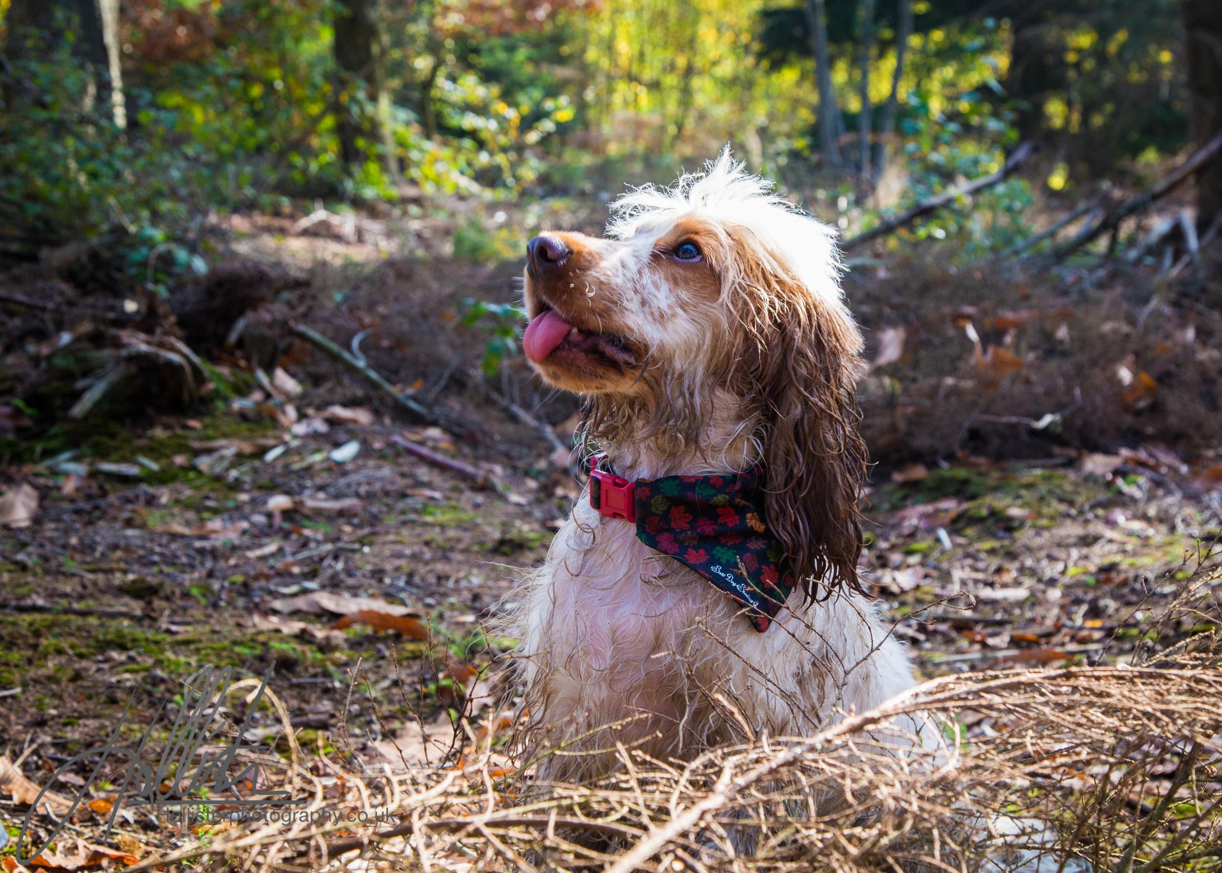 Hollisterphotography ABBY CLOWES WOOD DOG WALK-48.JPG