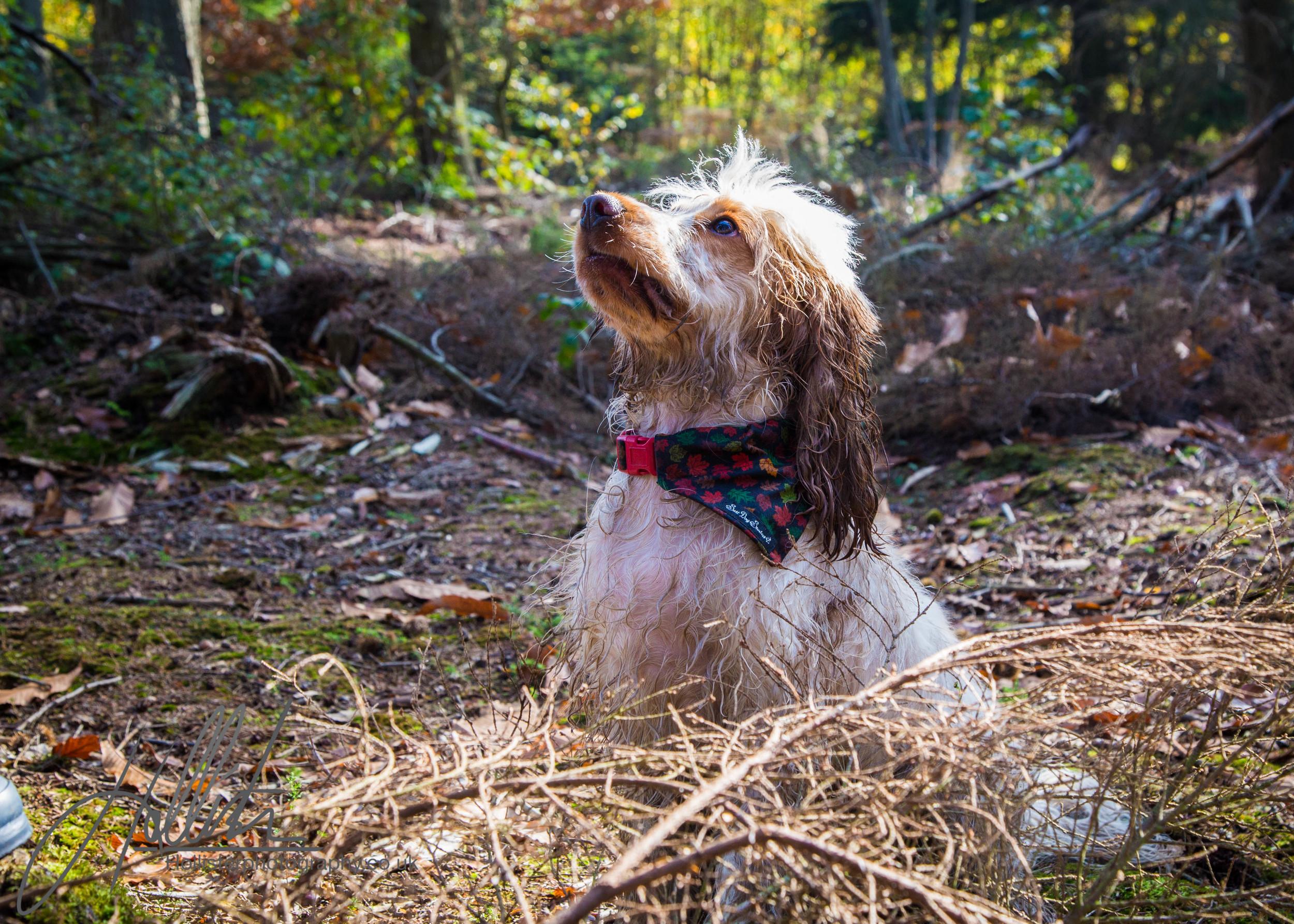 Hollisterphotography ABBY CLOWES WOOD DOG WALK-49.JPG