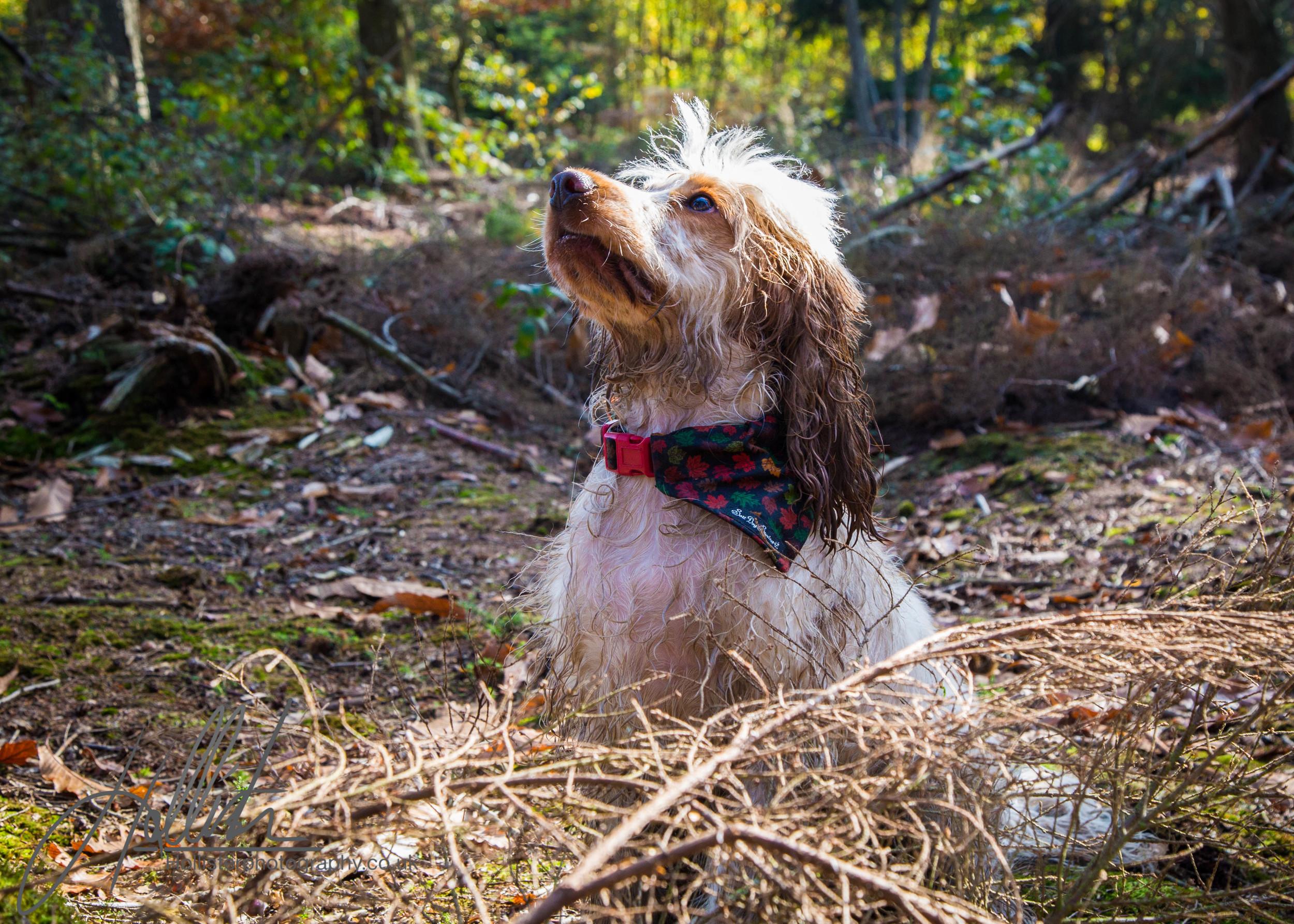Hollisterphotography ABBY CLOWES WOOD DOG WALK-50.JPG
