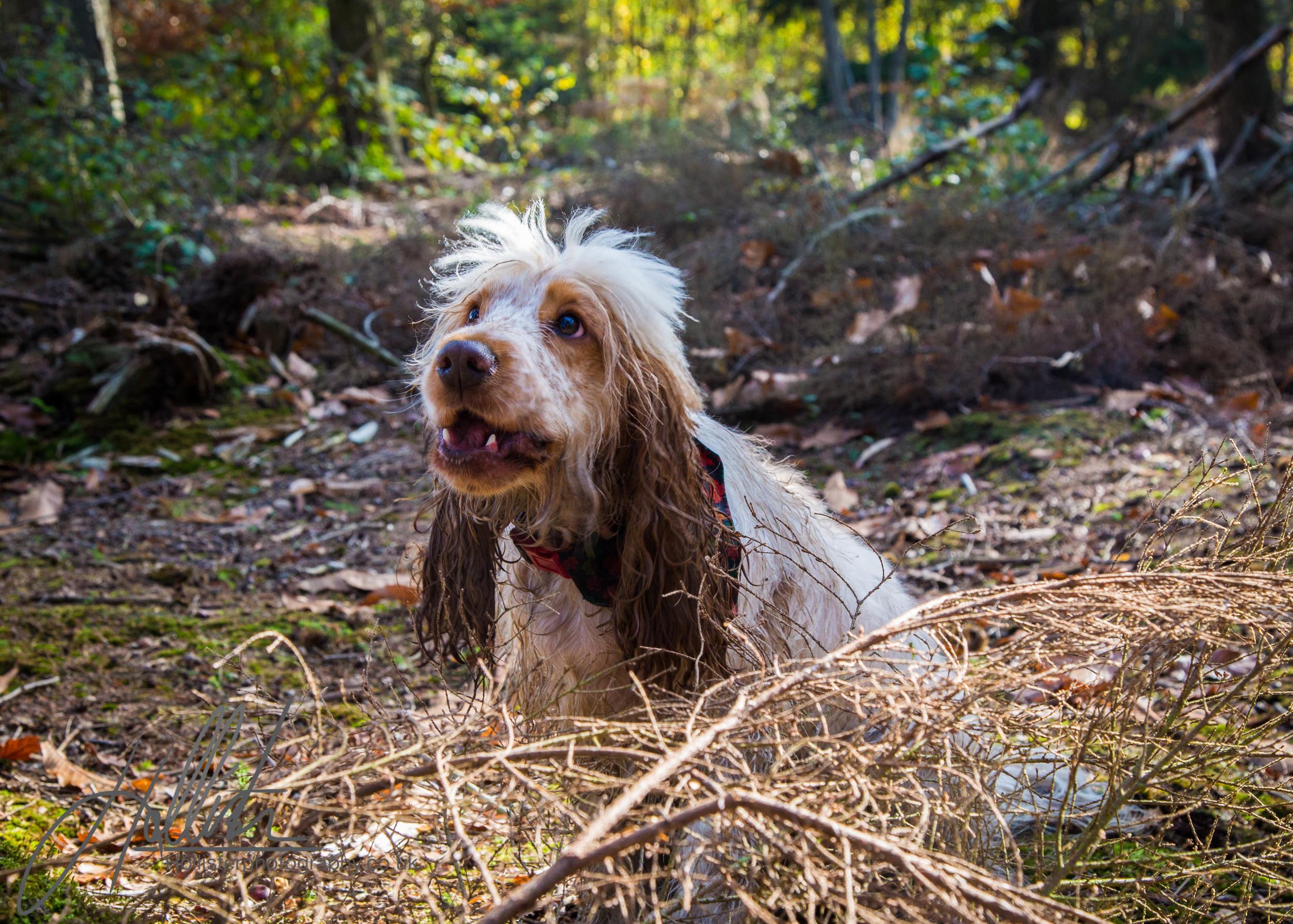 Hollisterphotography ABBY CLOWES WOOD DOG WALK-52.JPG