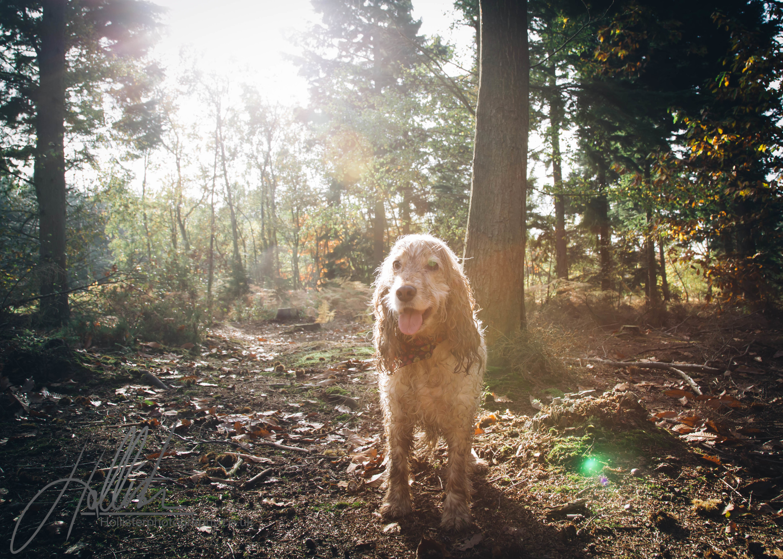 Hollisterphotography ABBY CLOWES WOOD DOG WALK-53.JPG