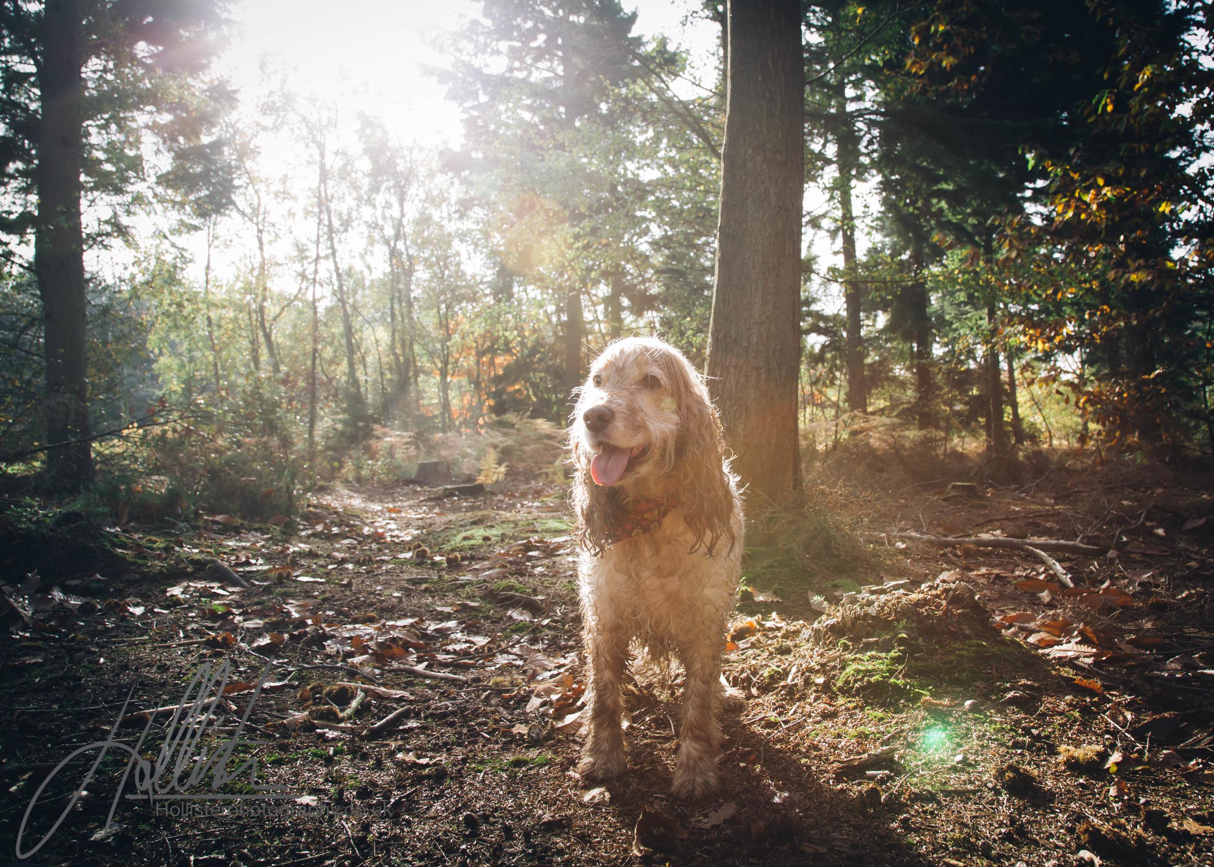 Hollisterphotography ABBY CLOWES WOOD DOG WALK-54.JPG