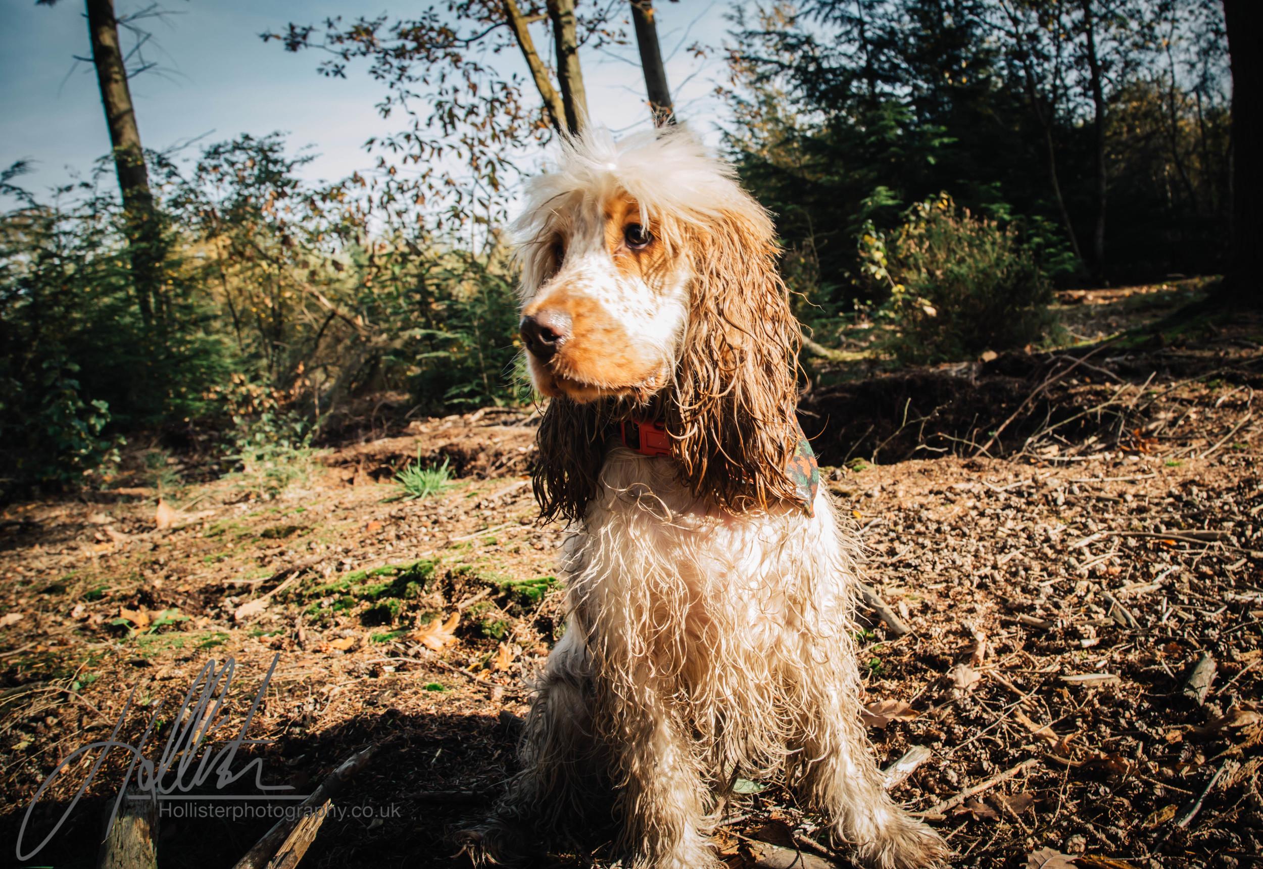 Hollisterphotography ABBY CLOWES WOOD DOG WALK-57.JPG