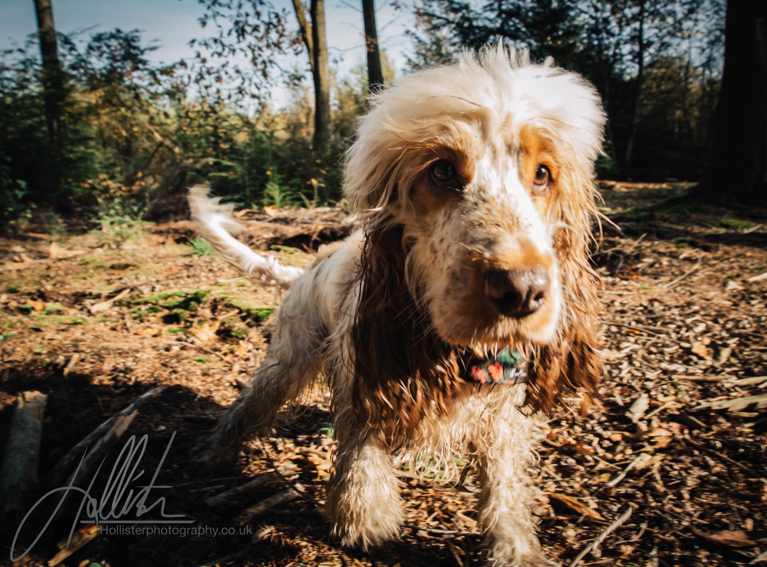 Hollisterphotography ABBY CLOWES WOOD DOG WALK-58.JPG